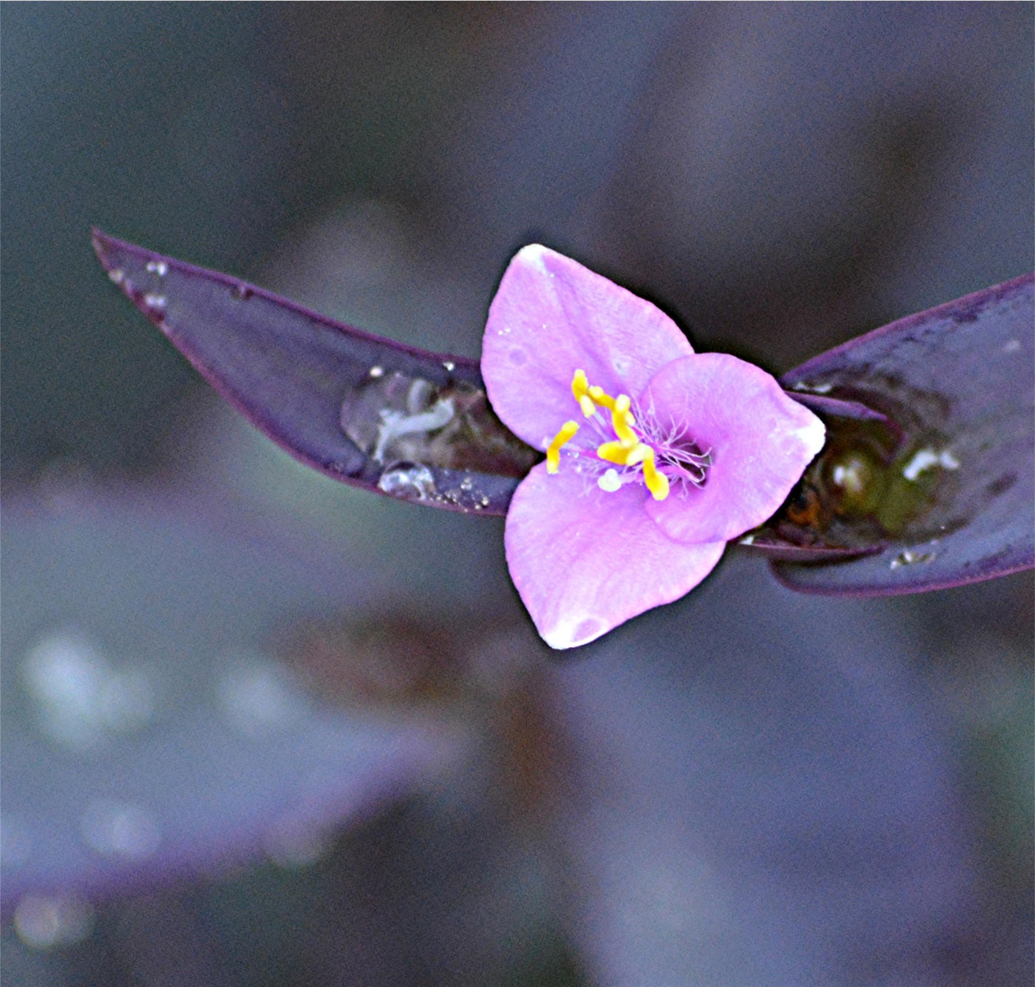 Photo in Random #small #beauty #flower