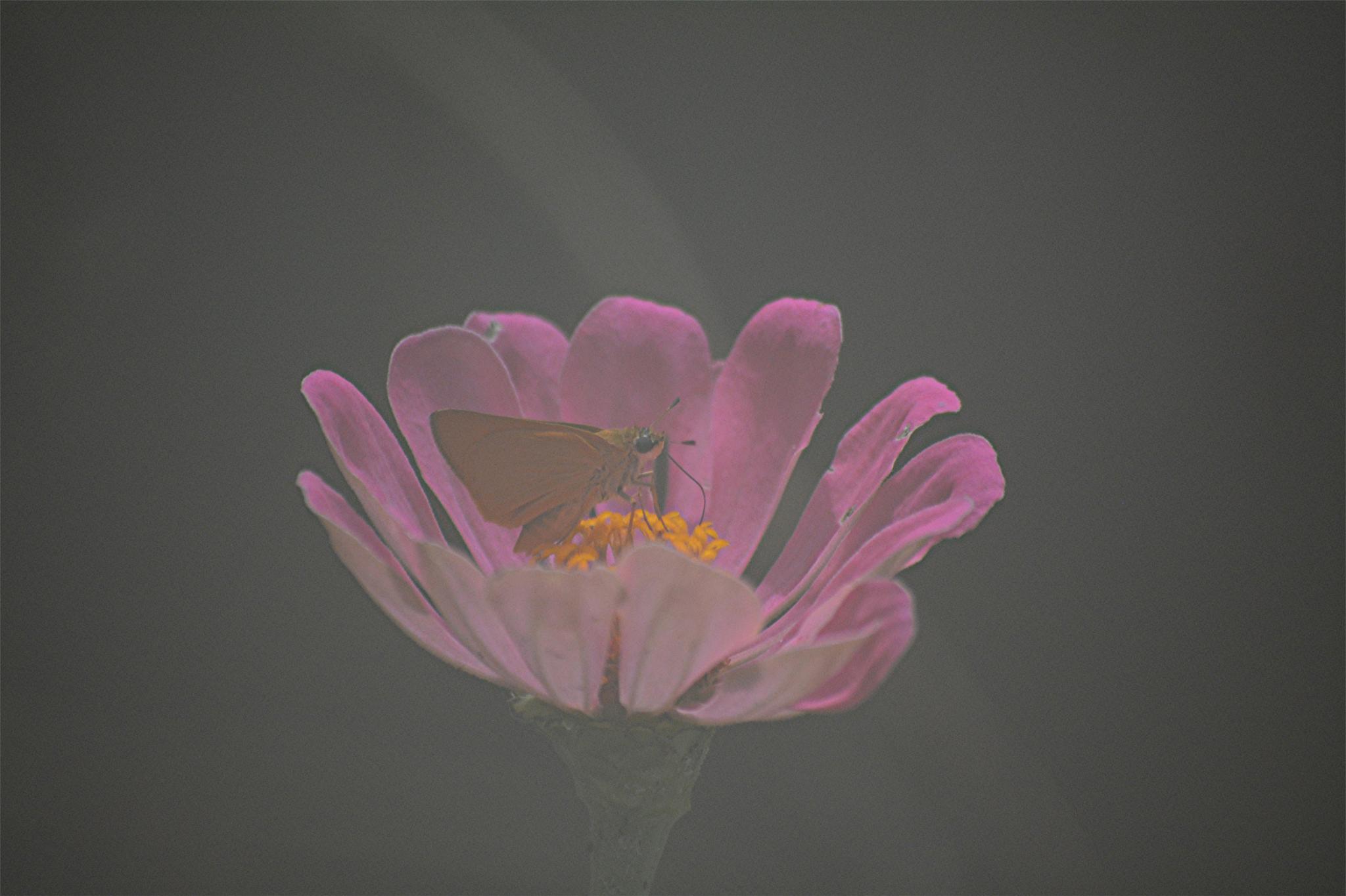 Photo in Random #small #misty #butterfly