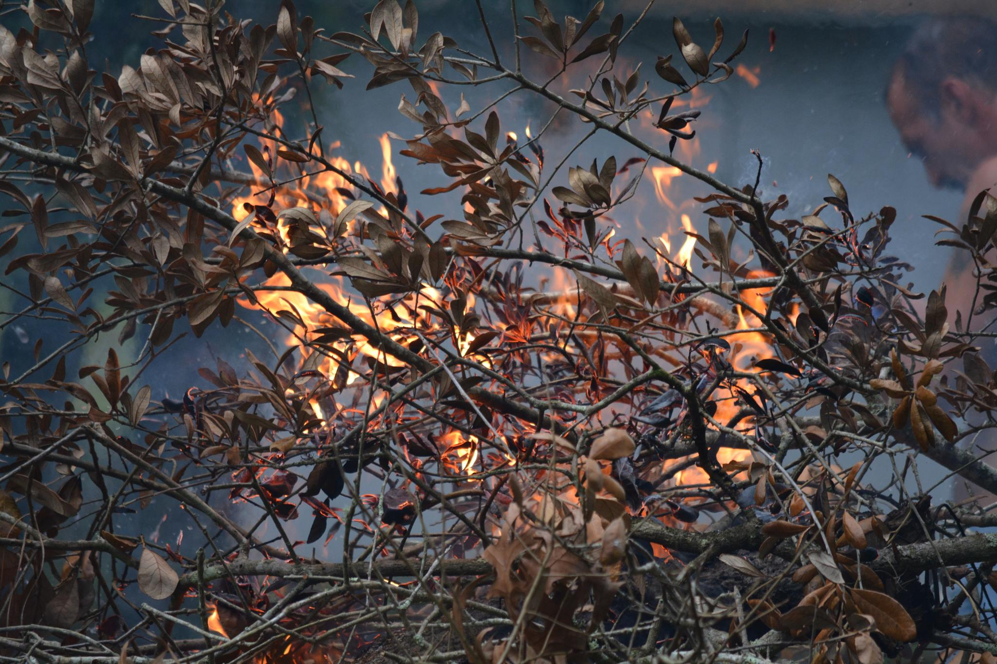 Photo in Random #fire #twigs #branches #tree