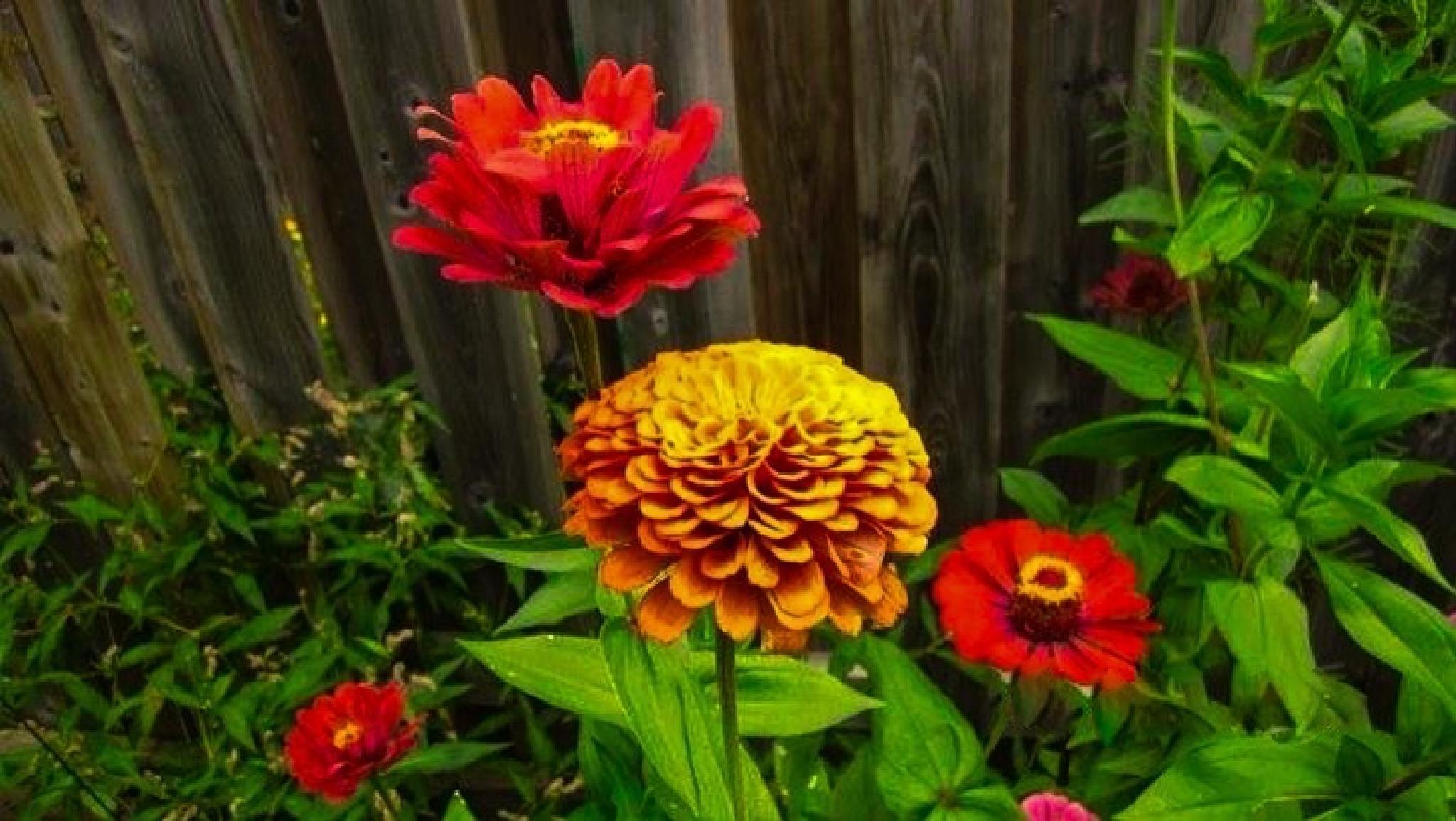 My garden by Anjana Chakraborti