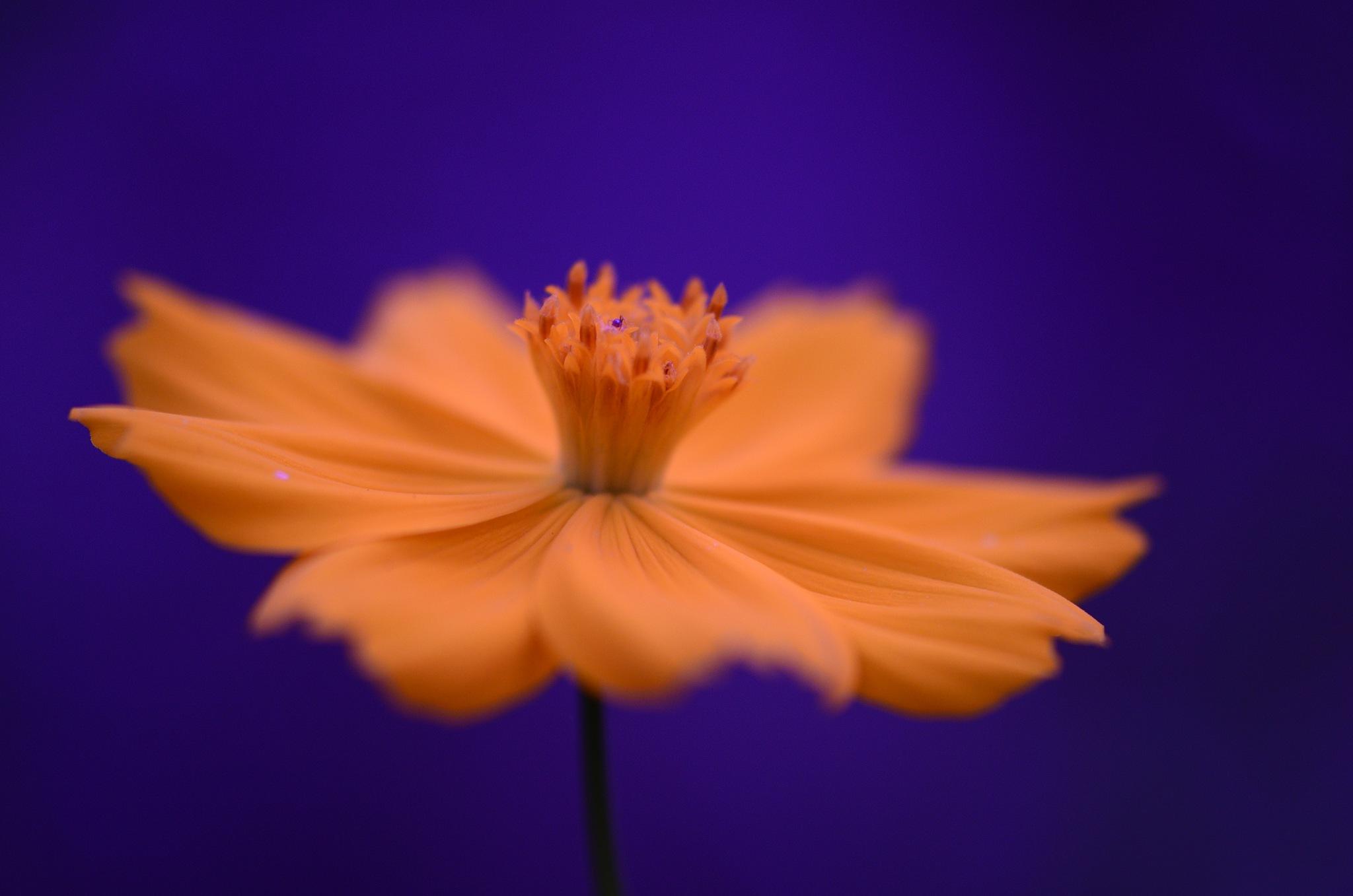 Yellow by Yulius