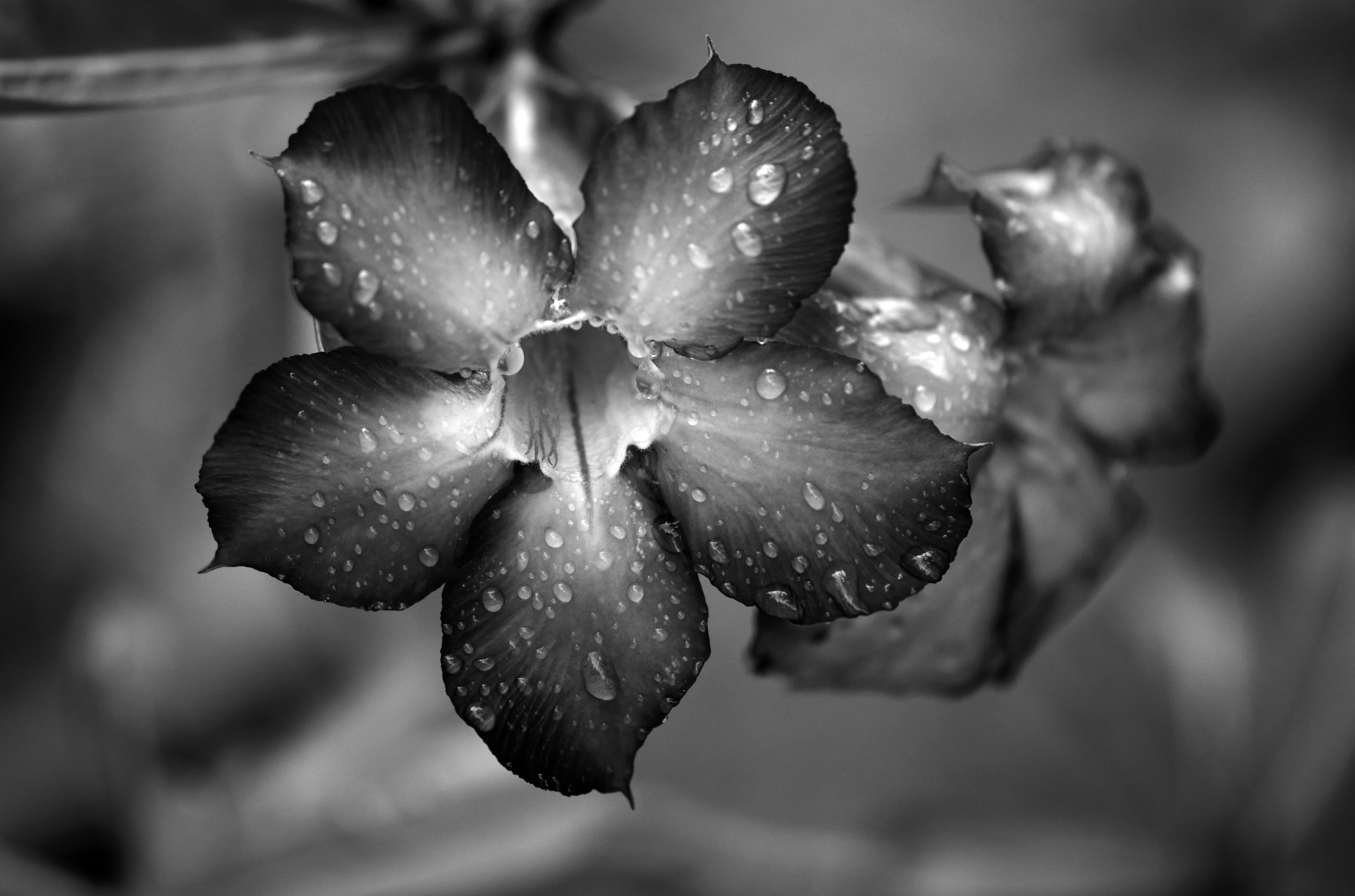 Temple Flower by Yulius B Susilo