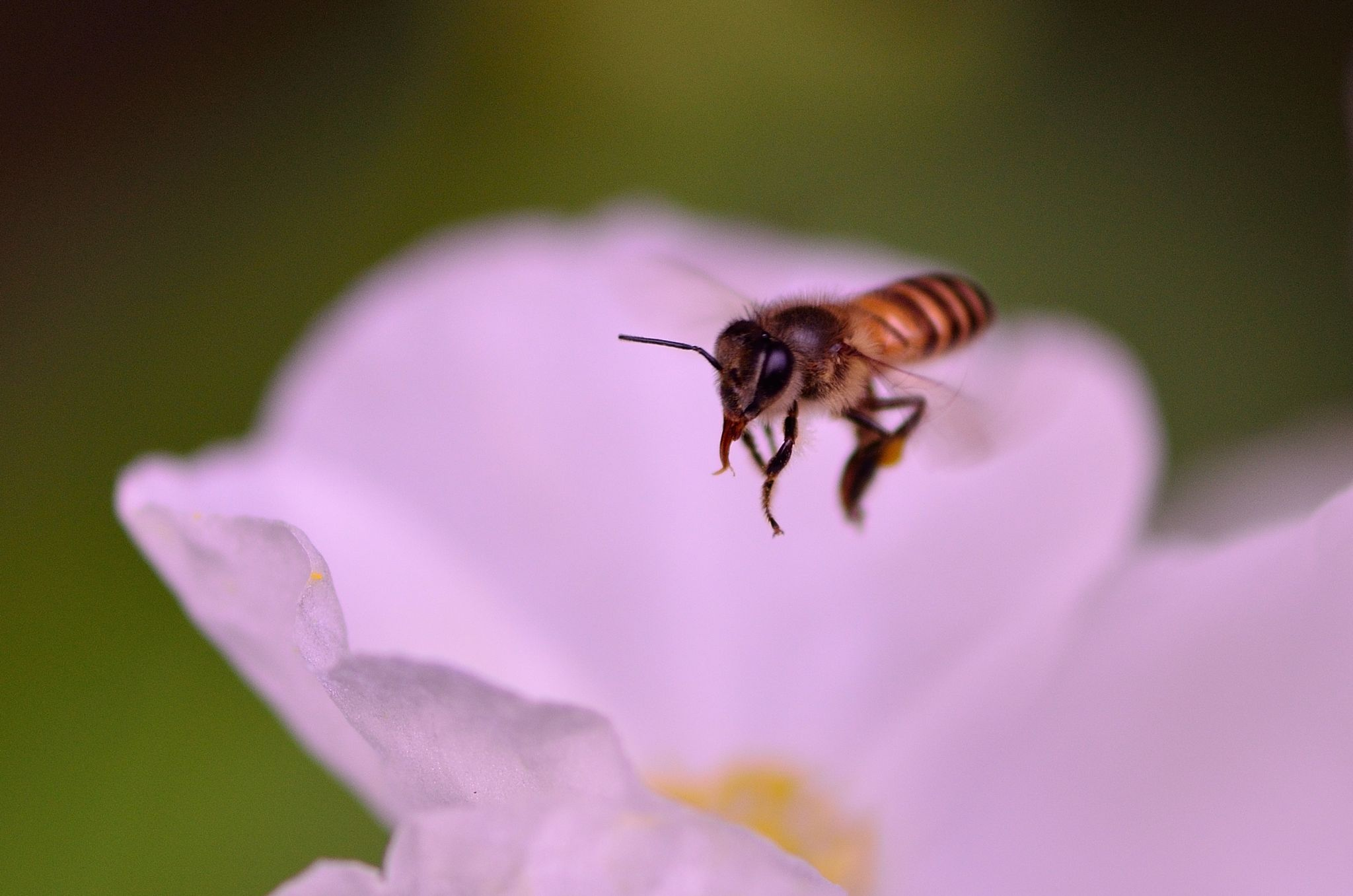Hovering by Yulius B Susilo