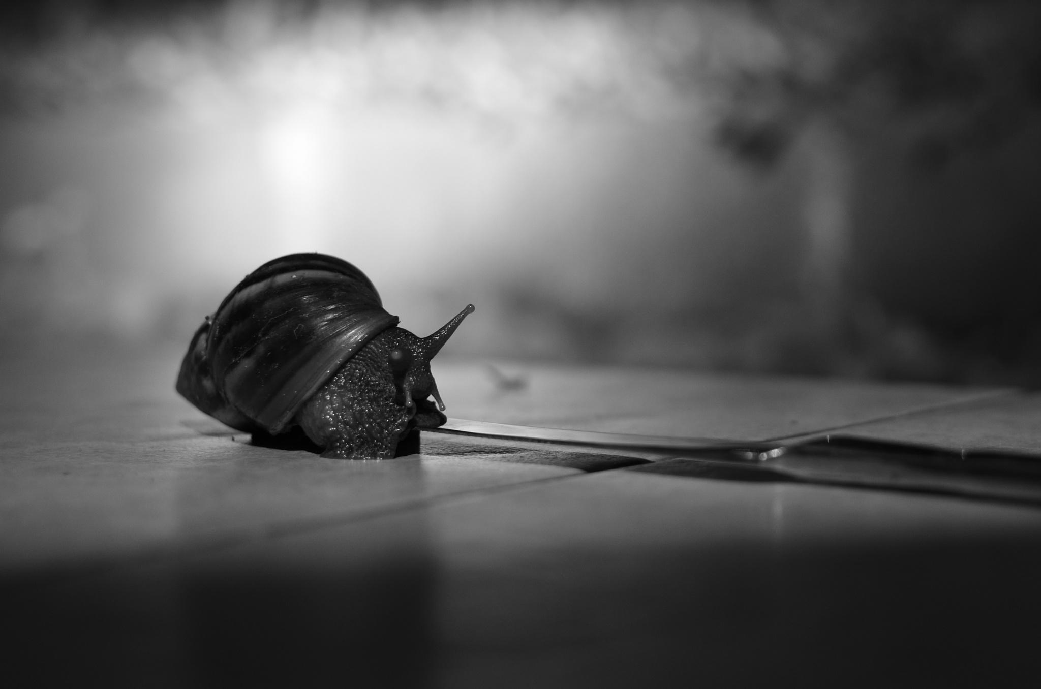 Amazing Snail by Yulius B Susilo