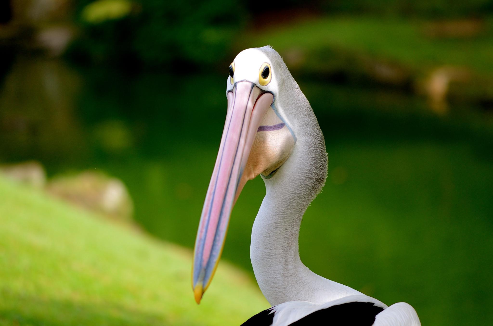 Long Beak by Yulius B Susilo