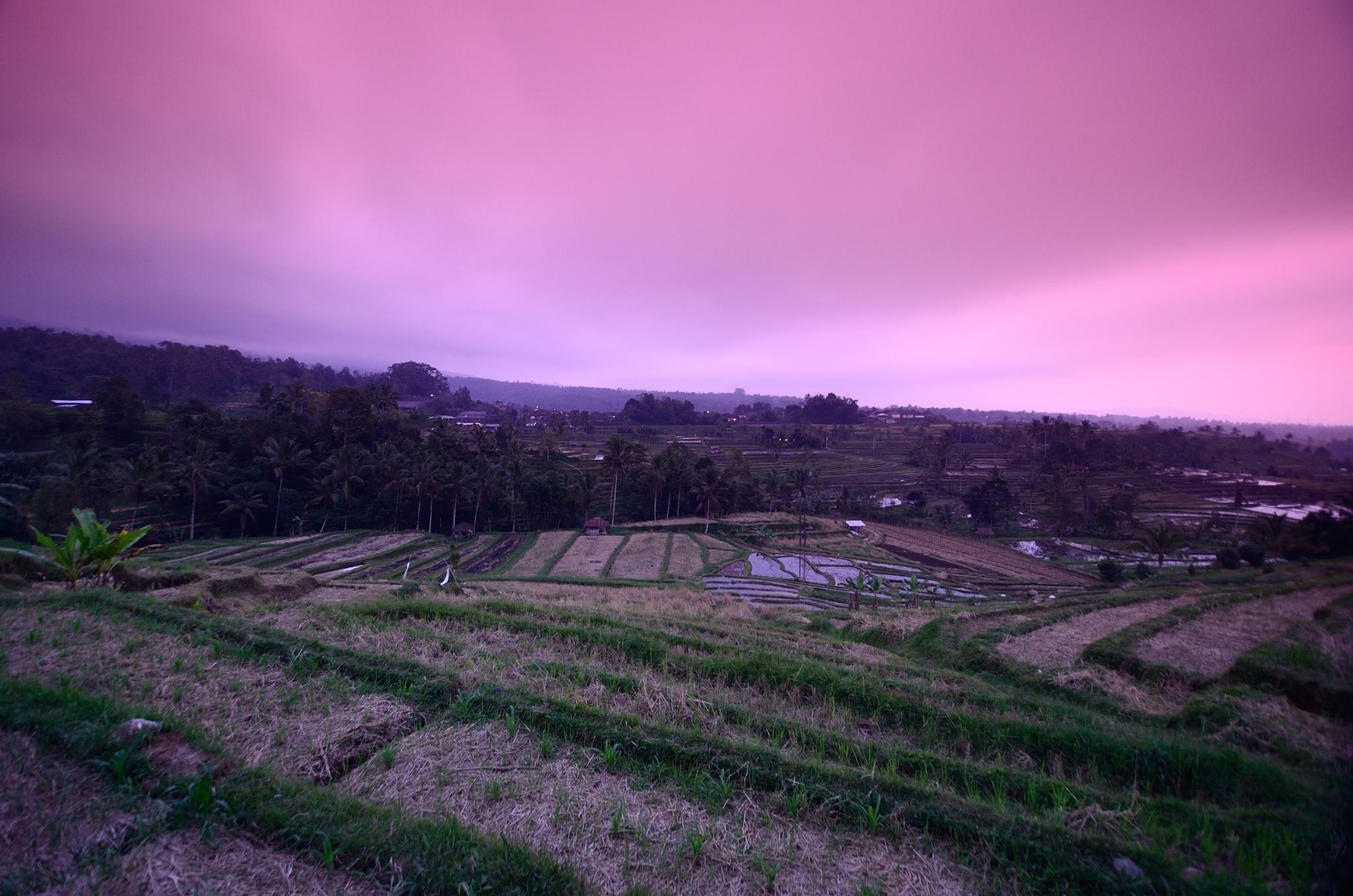 Jatiluwih Rice Field, Bali by Yulius