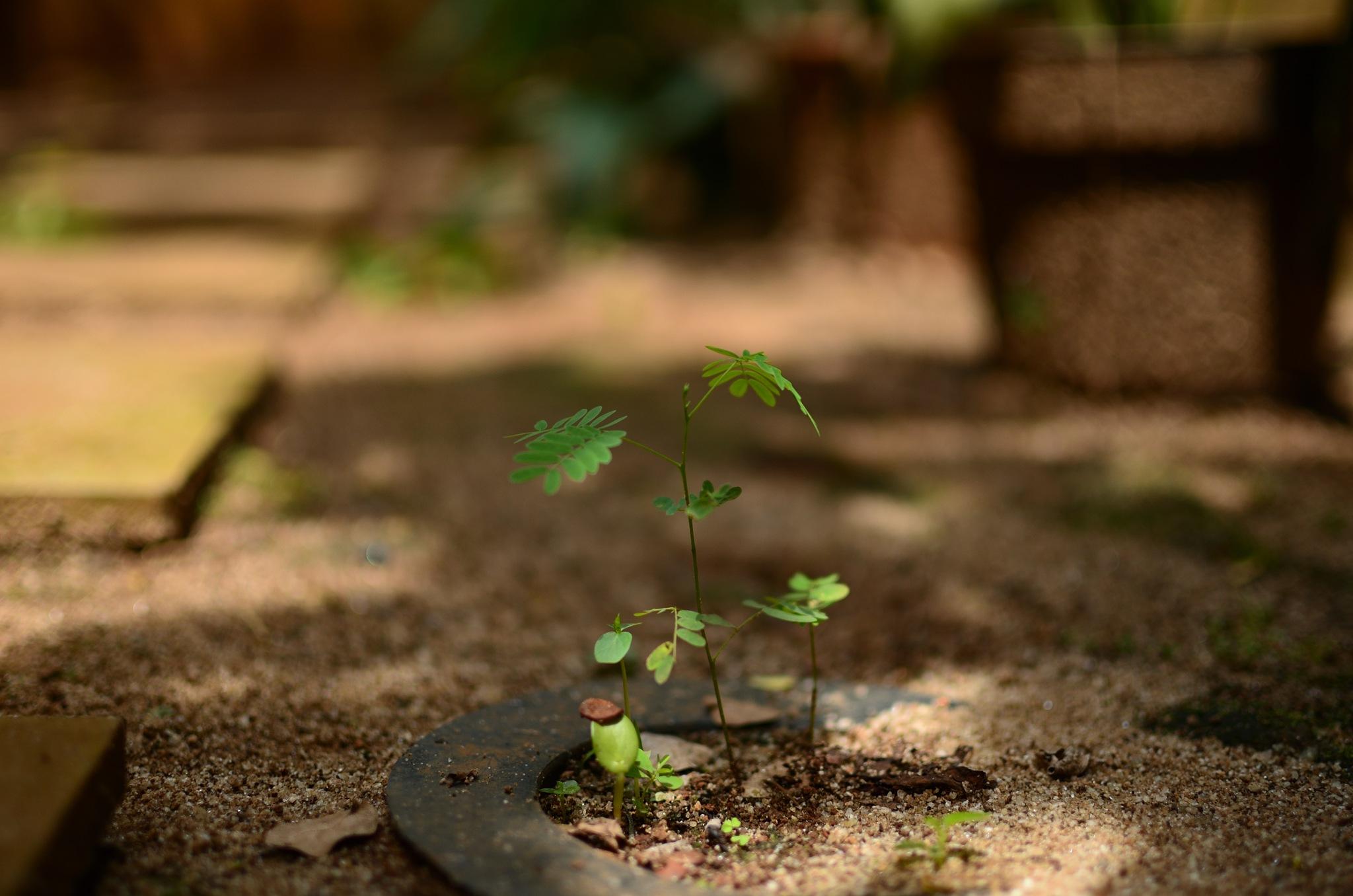 Growing by Yulius
