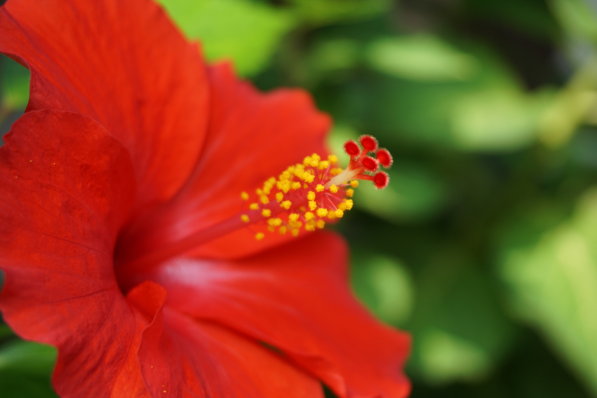 just hibiscus by maryyeo_28