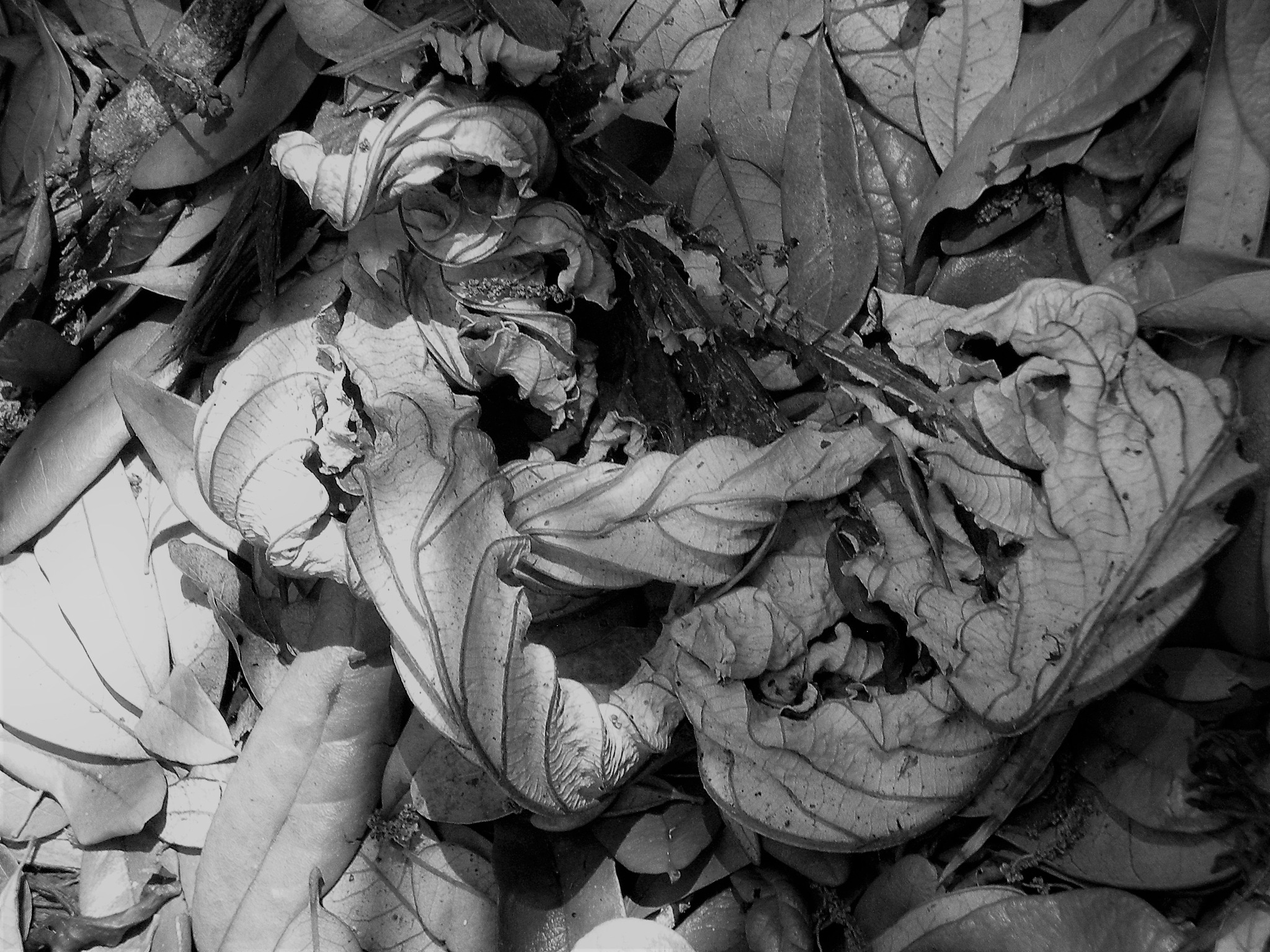 Fall leaves by Barbara Stockford