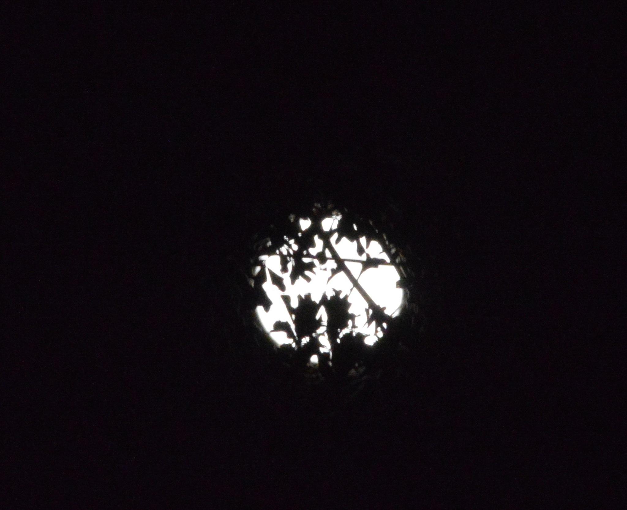hidden moon by rednecksummers