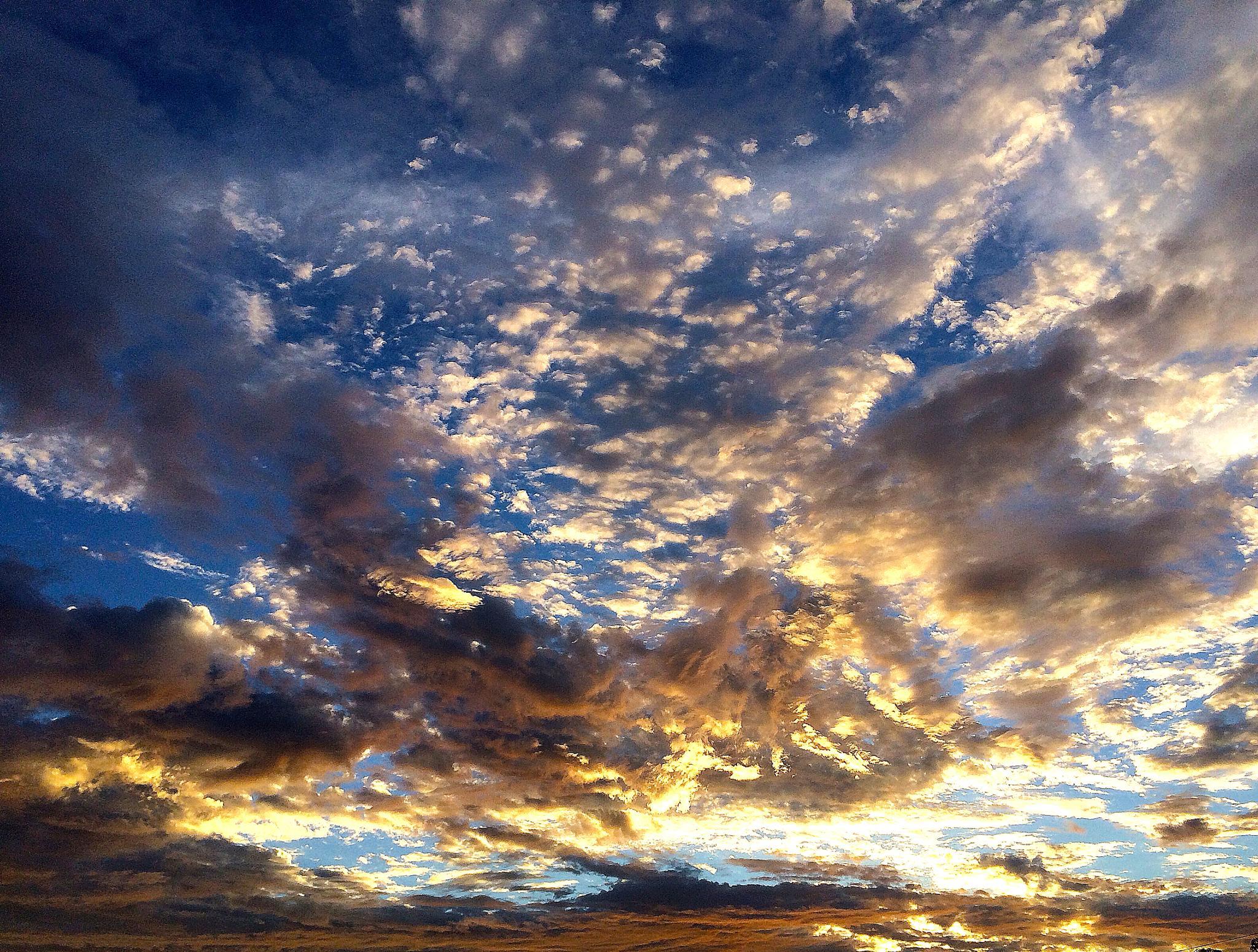 Gold in the Sky by Martha van der Westhuizen