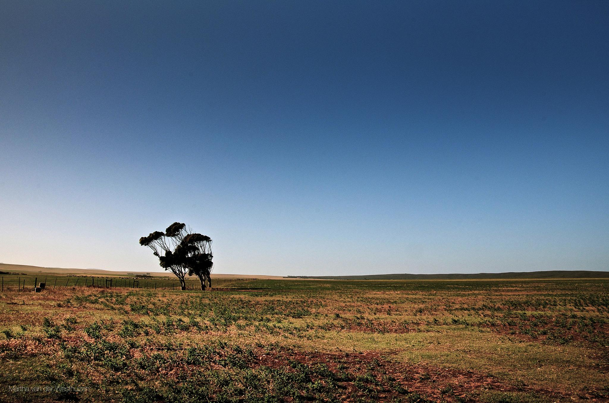 Photo in Landscape #landscape #tree #wind bent #farm fields #blue sky