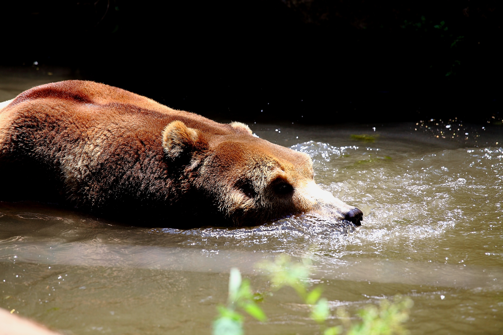 take a bath.... by liongcewong