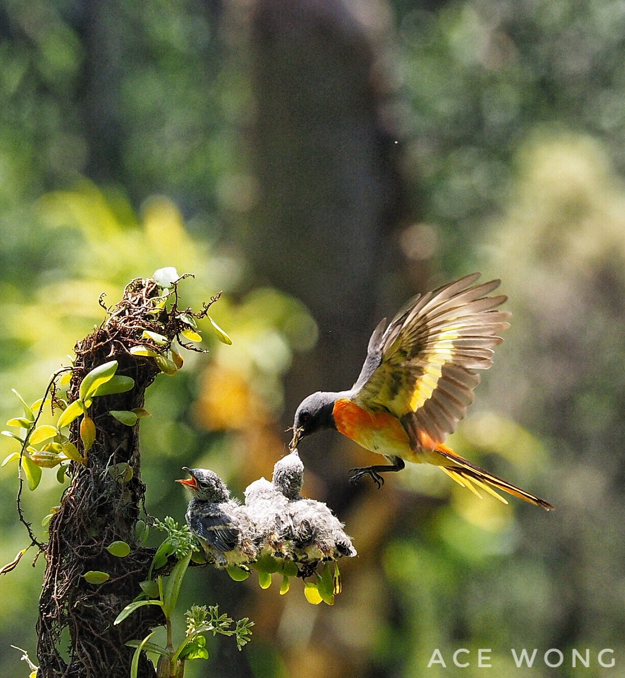 Birds feeding 01 by liongcewong