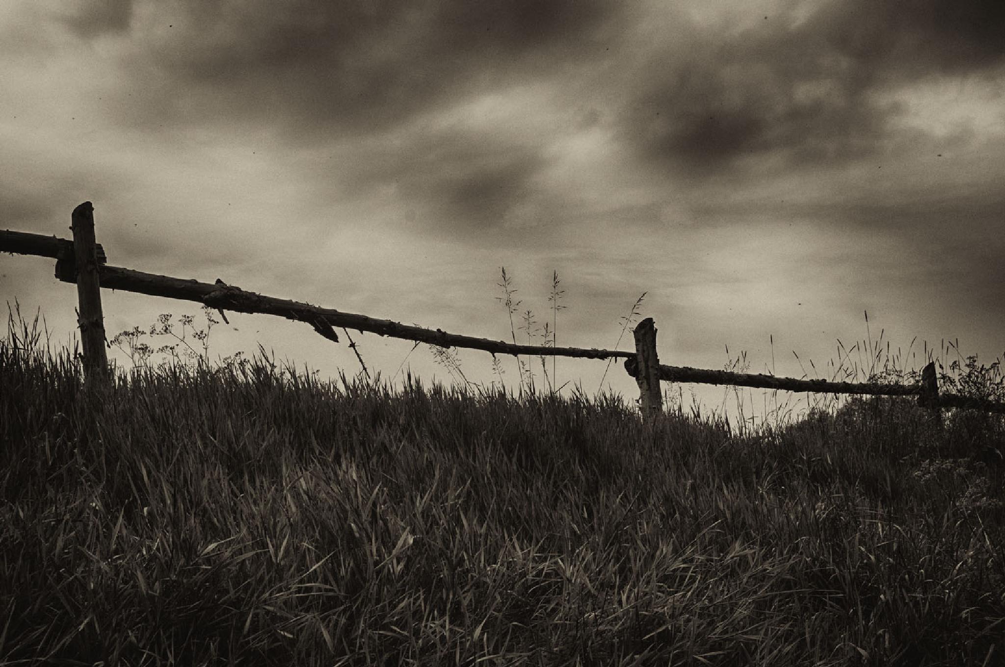 Untitled by k.demjanic photography
