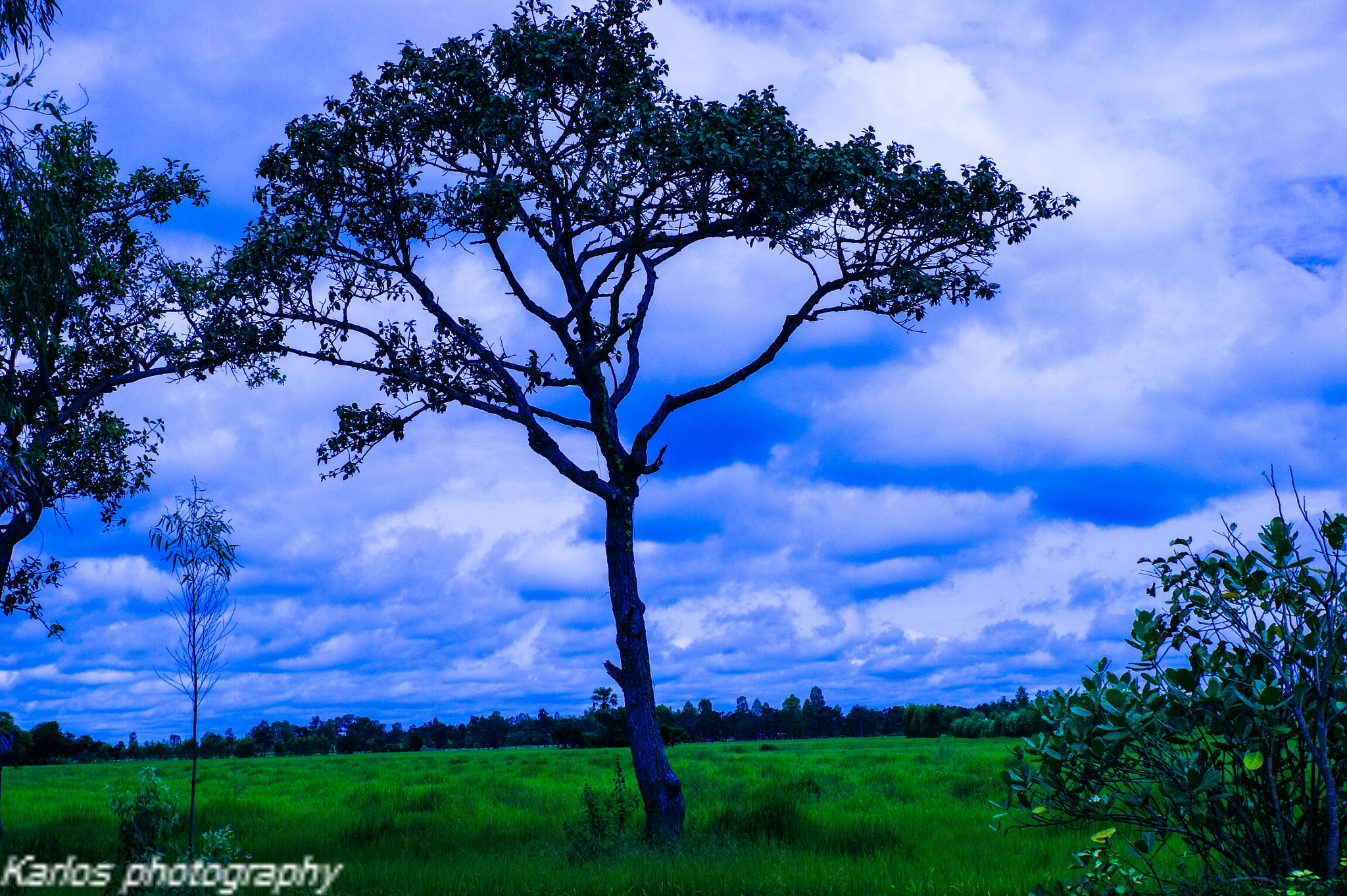 Rice field  by Karlos