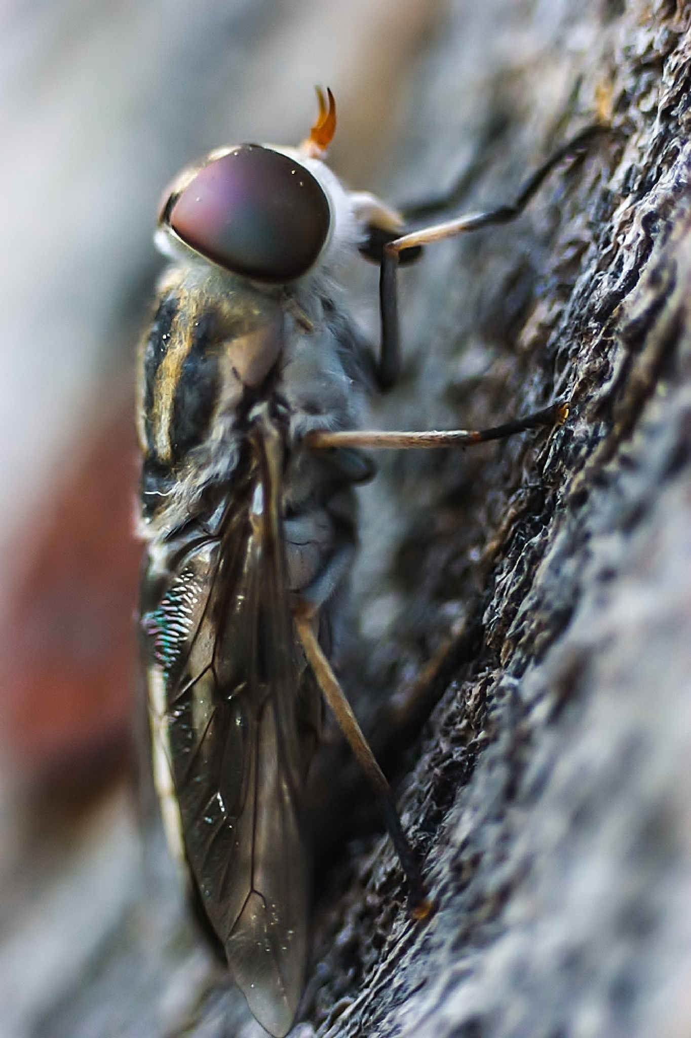 macro fly shot by Karlos