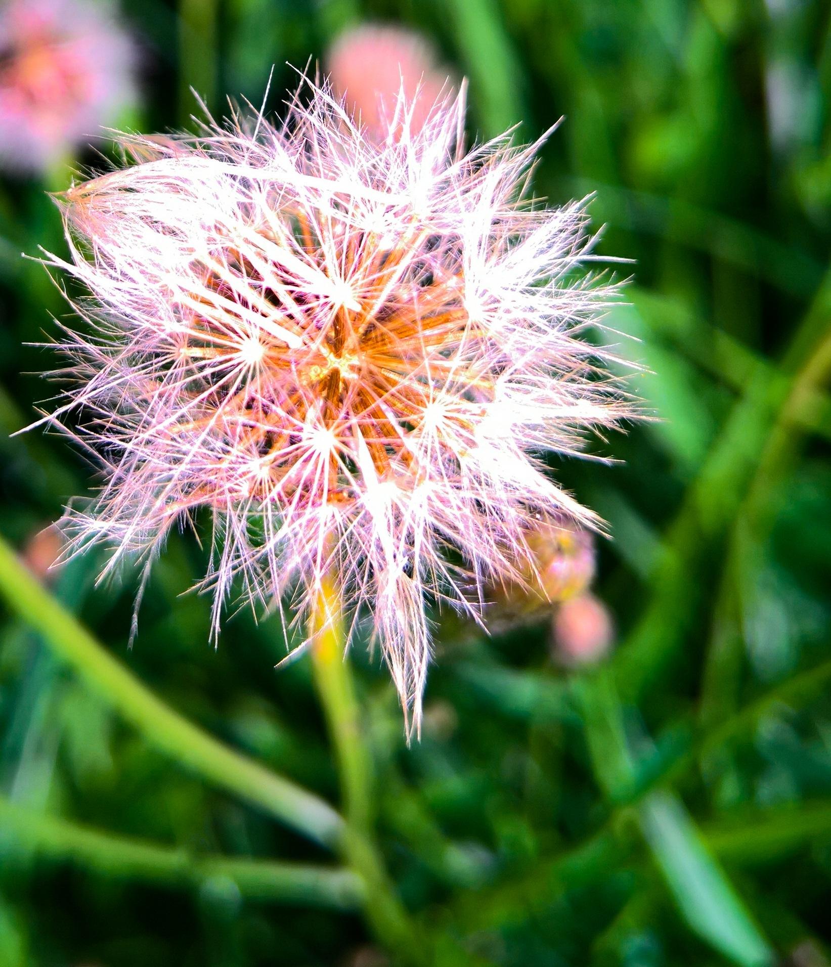 flower by Thomas Adamski