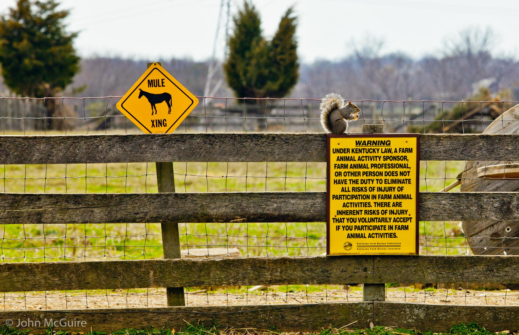 Squirrel on a Fence. by JohnMcGuire