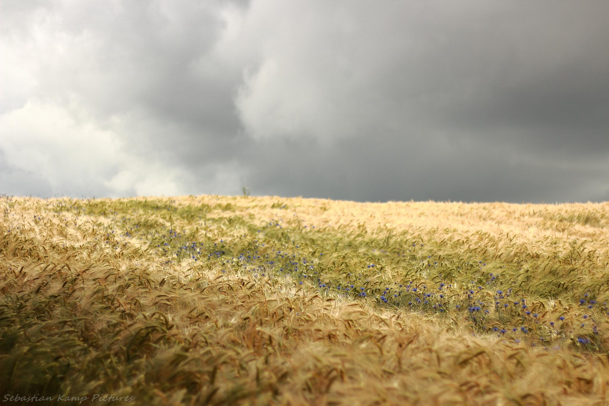 windy landscape by Landschaft -UM