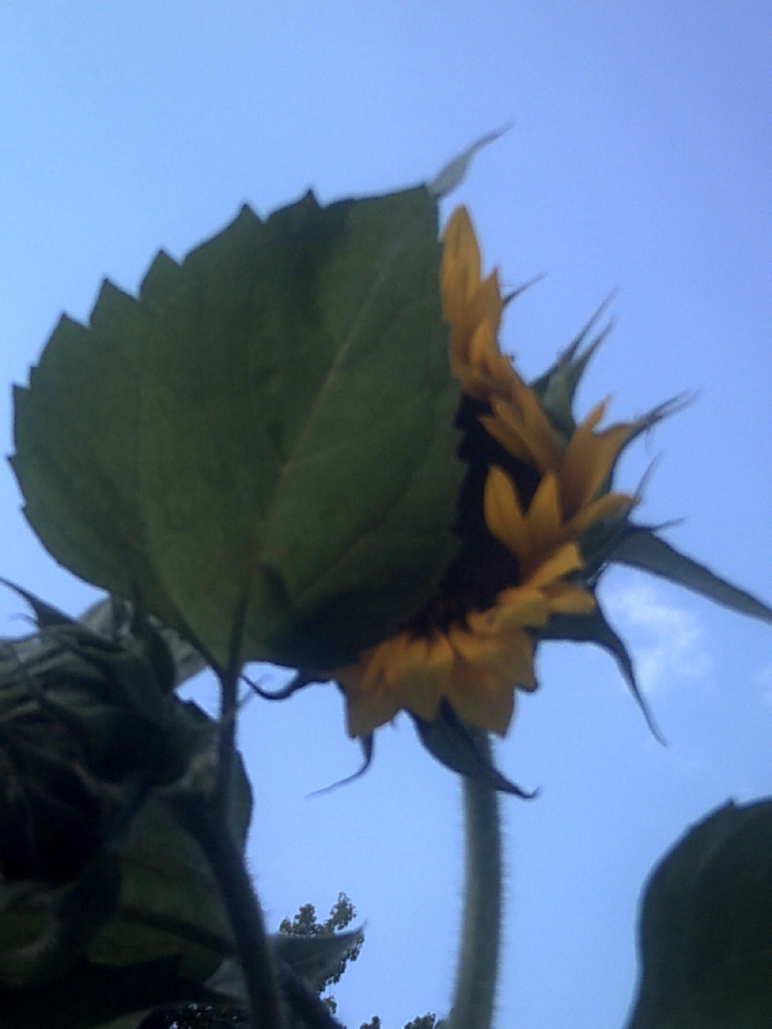 hiding from the sun by franki503