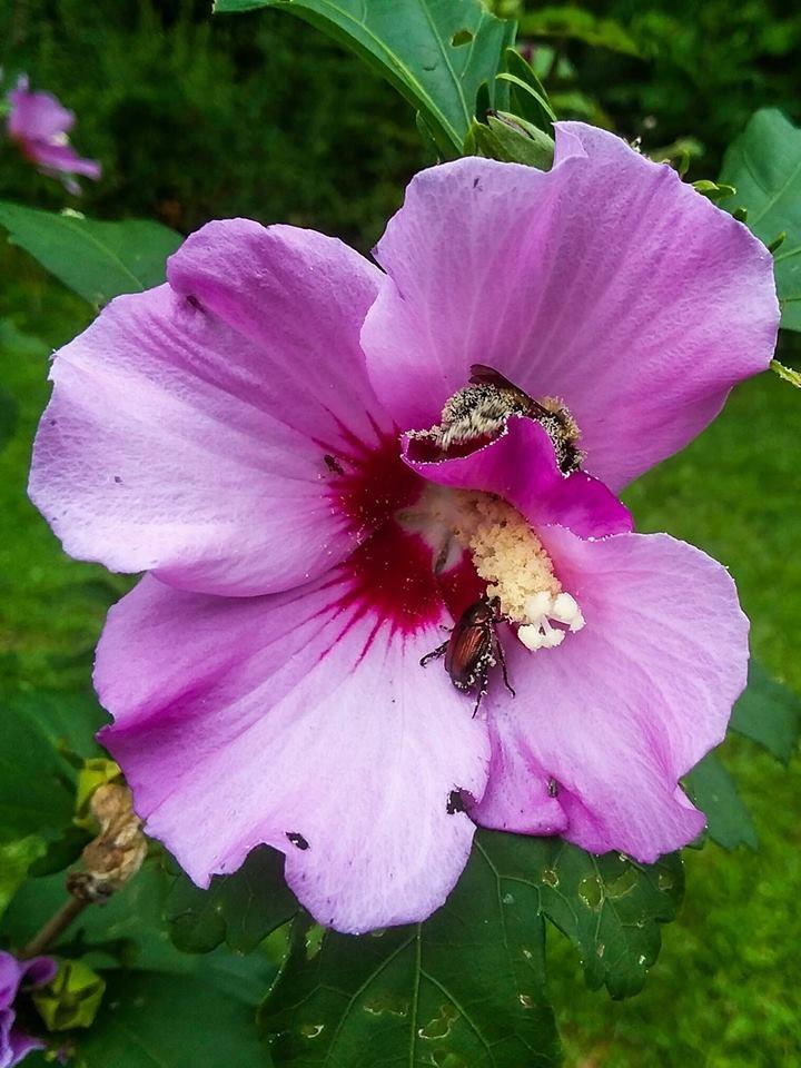 pollination by franki503