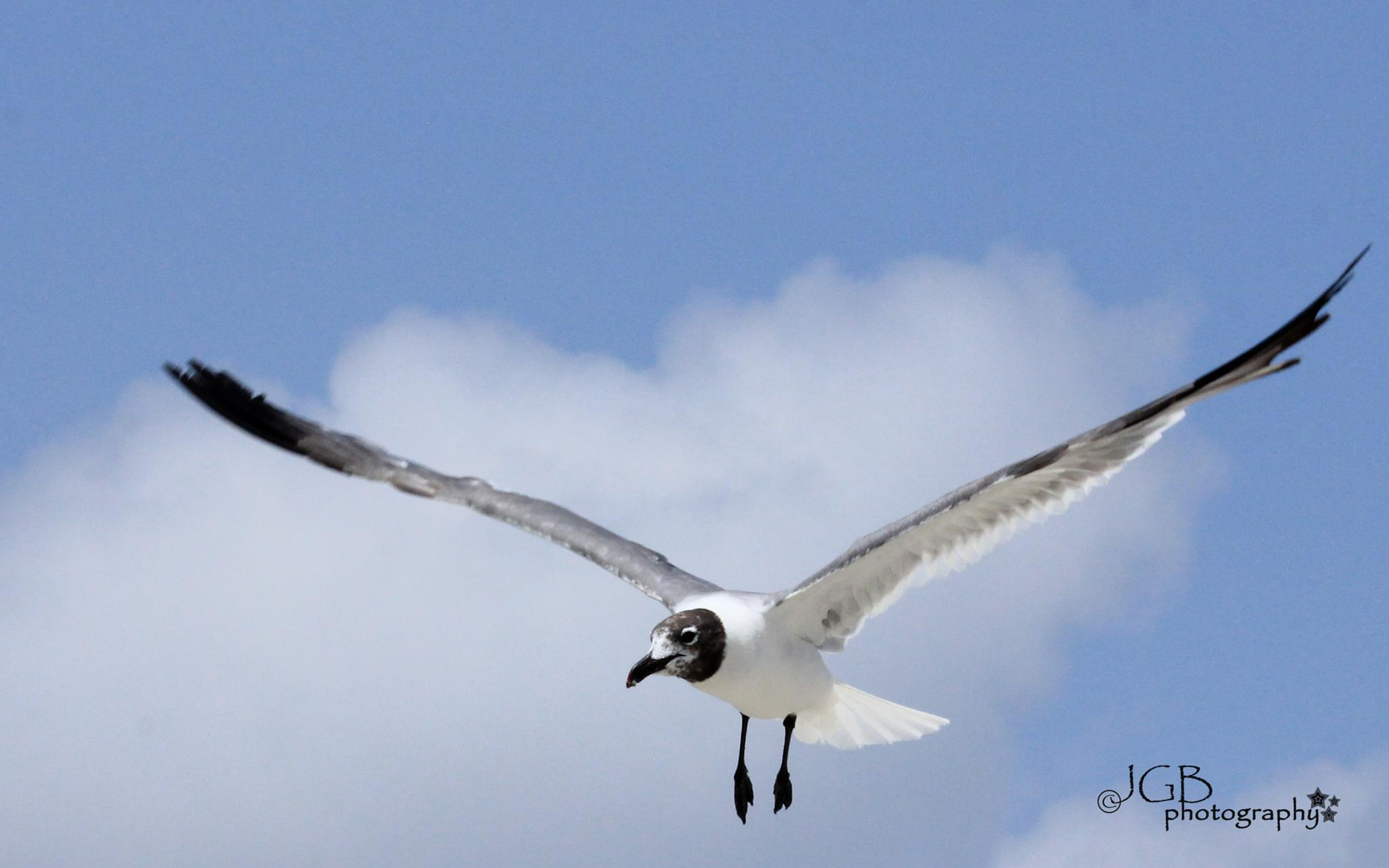 Seagull by JonhayGBuitron
