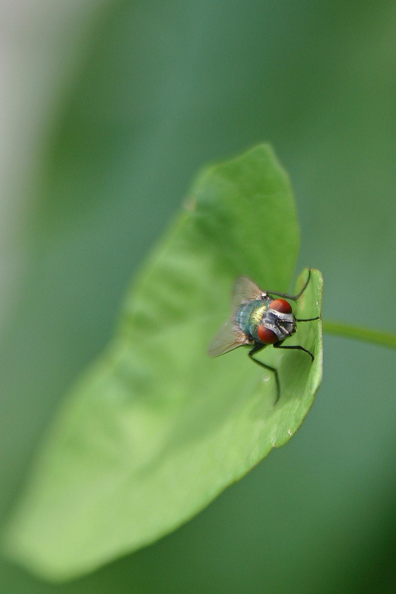 Green Fly by ejdelamora