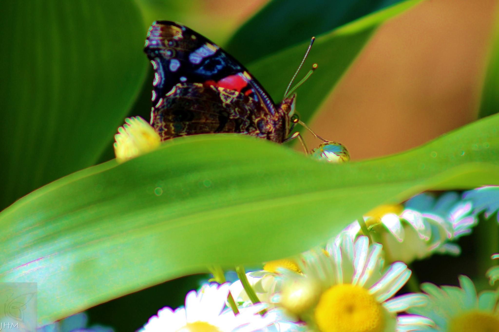 Butterfly drinking dew drop by jjm61064