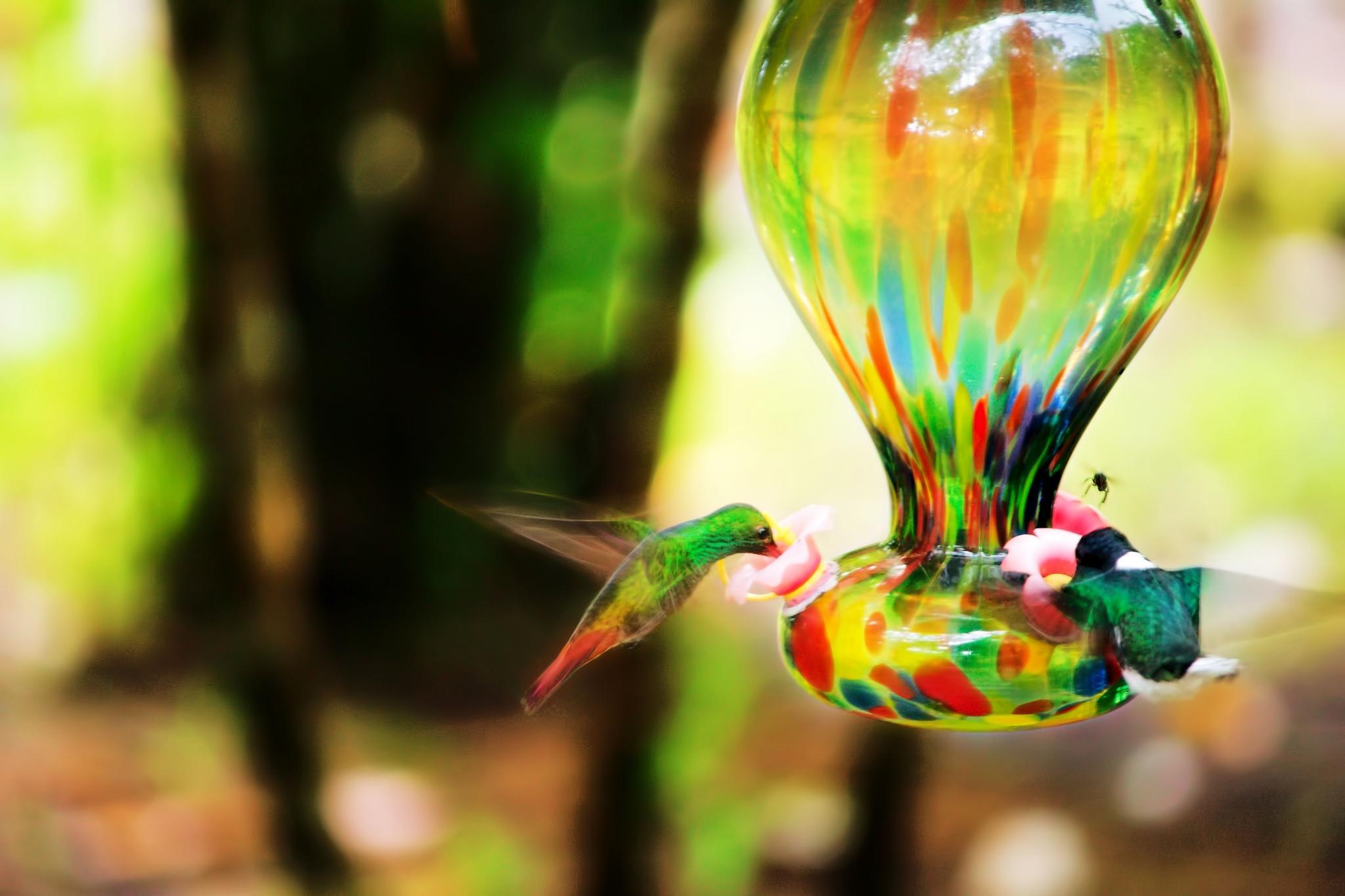 Hummingbird by ochemodan