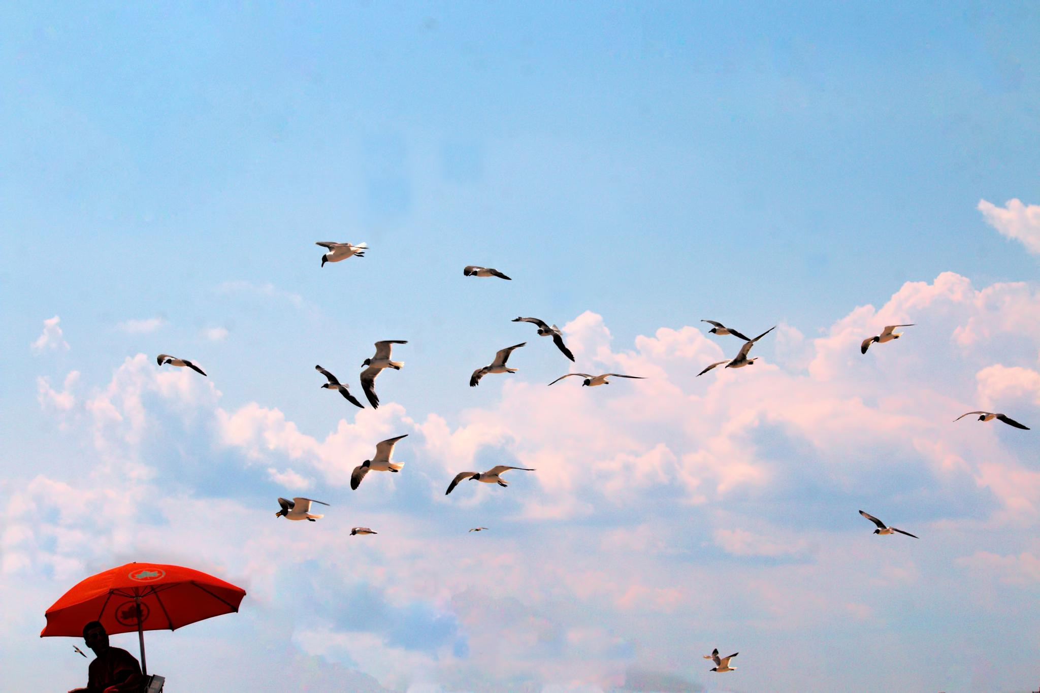 Birds. Remix. by ochemodan