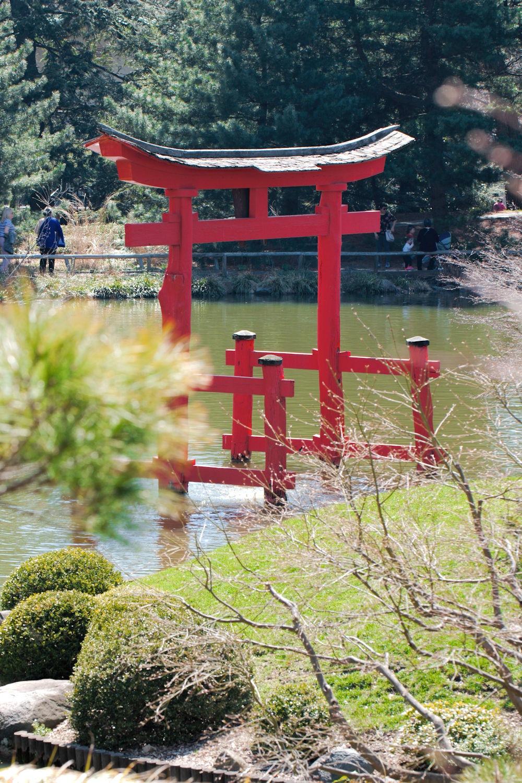 Japanese Pond by ochemodan