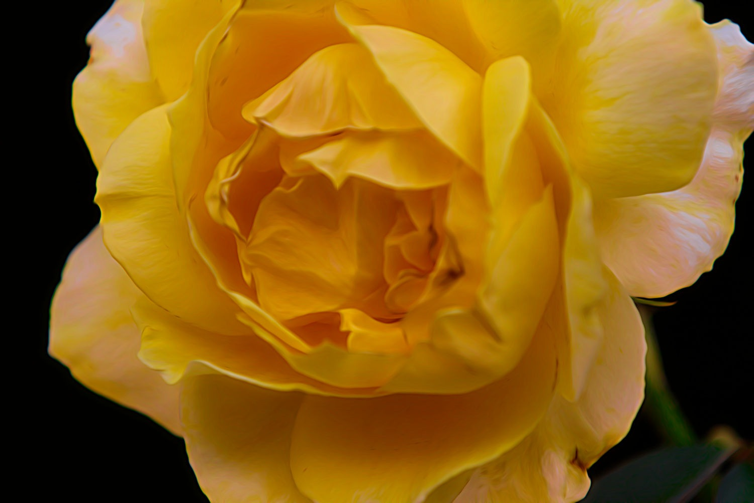 Yellow rose 2 by ochemodan