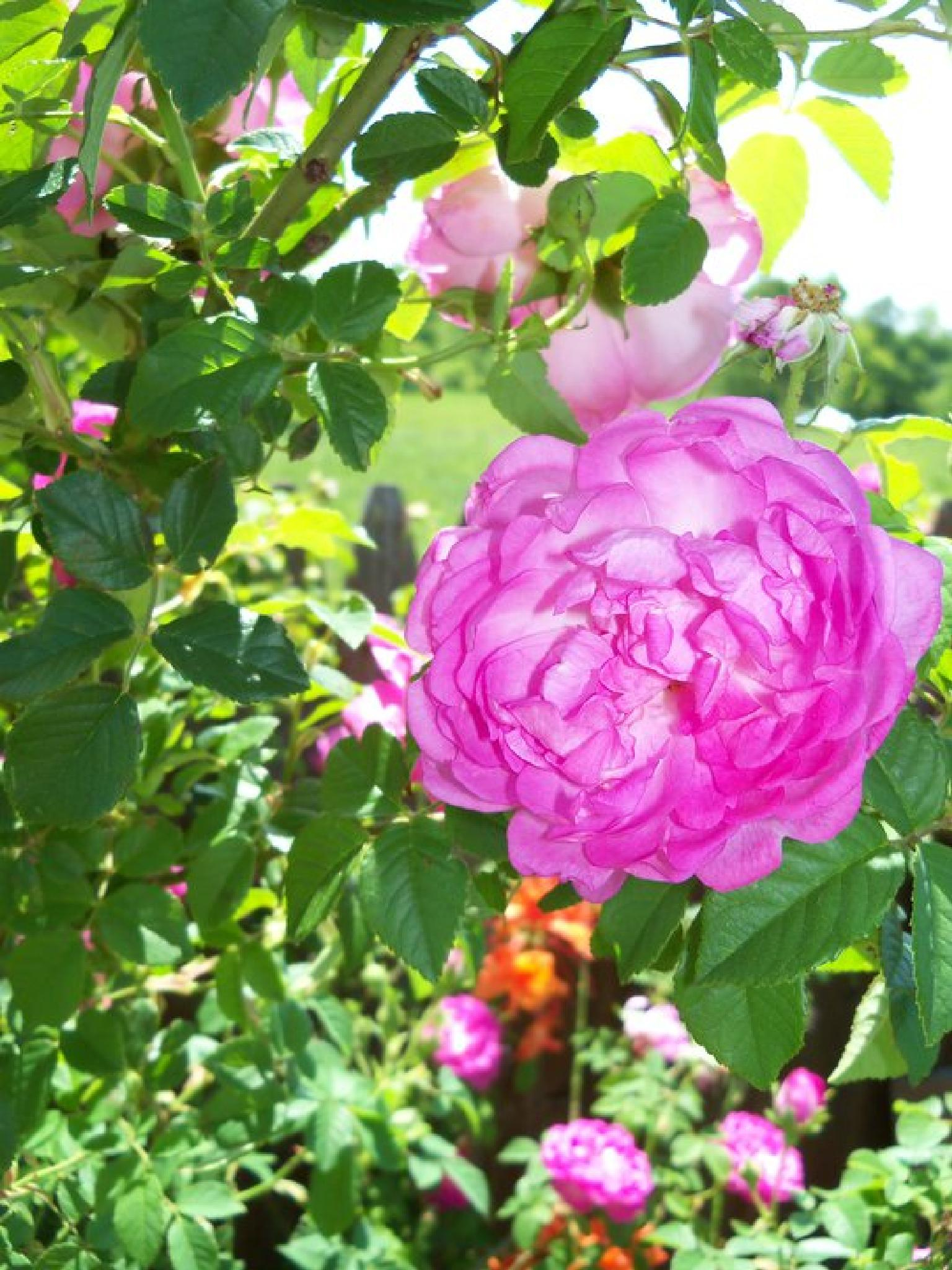 Grannys flower garden by fffastonly