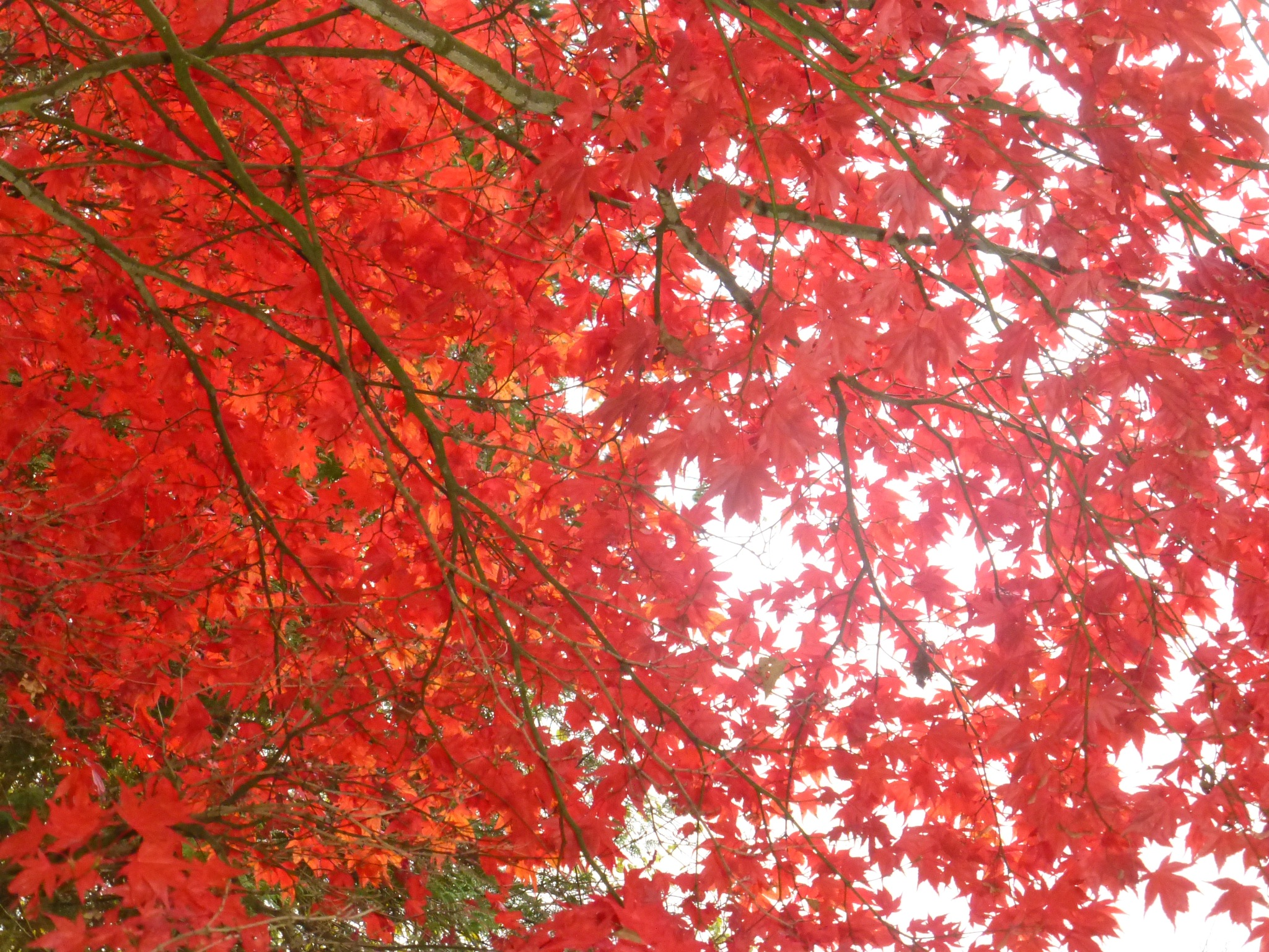 Seasonal colour by gaffer.lyons