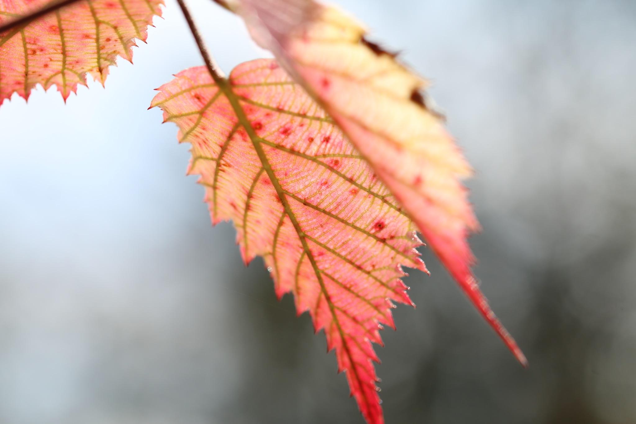 leaves by GabrieleHeiss