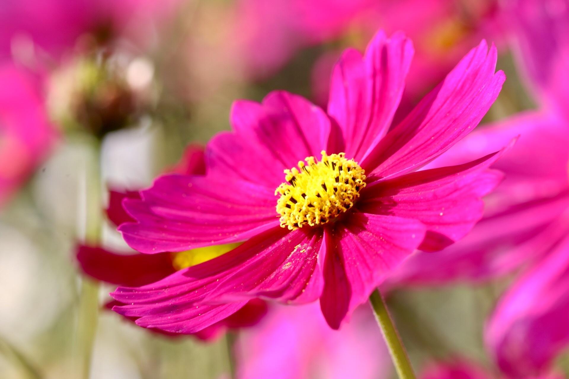 Pink by GabrieleHeiss