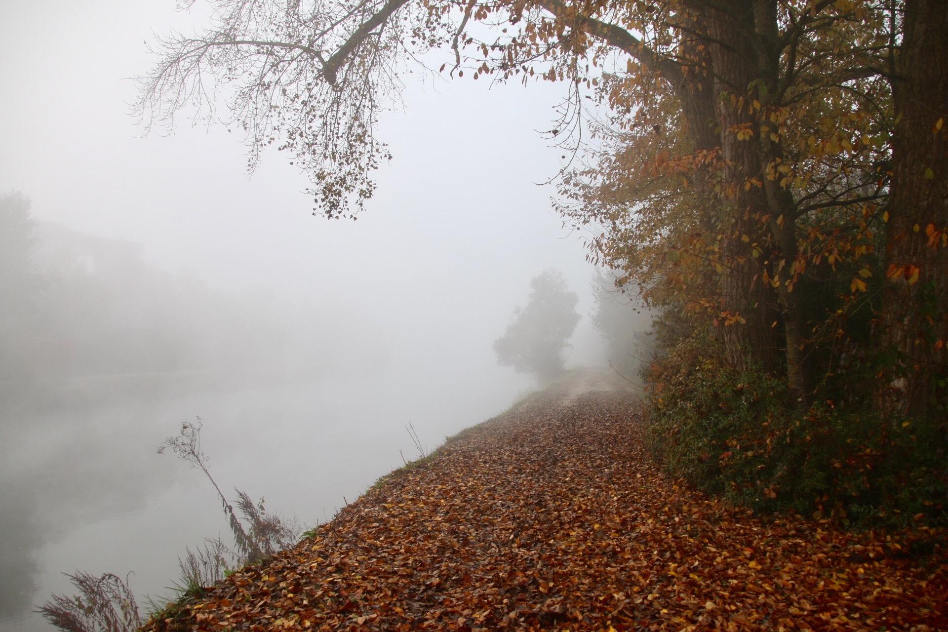 Fog by GabrieleHeiss