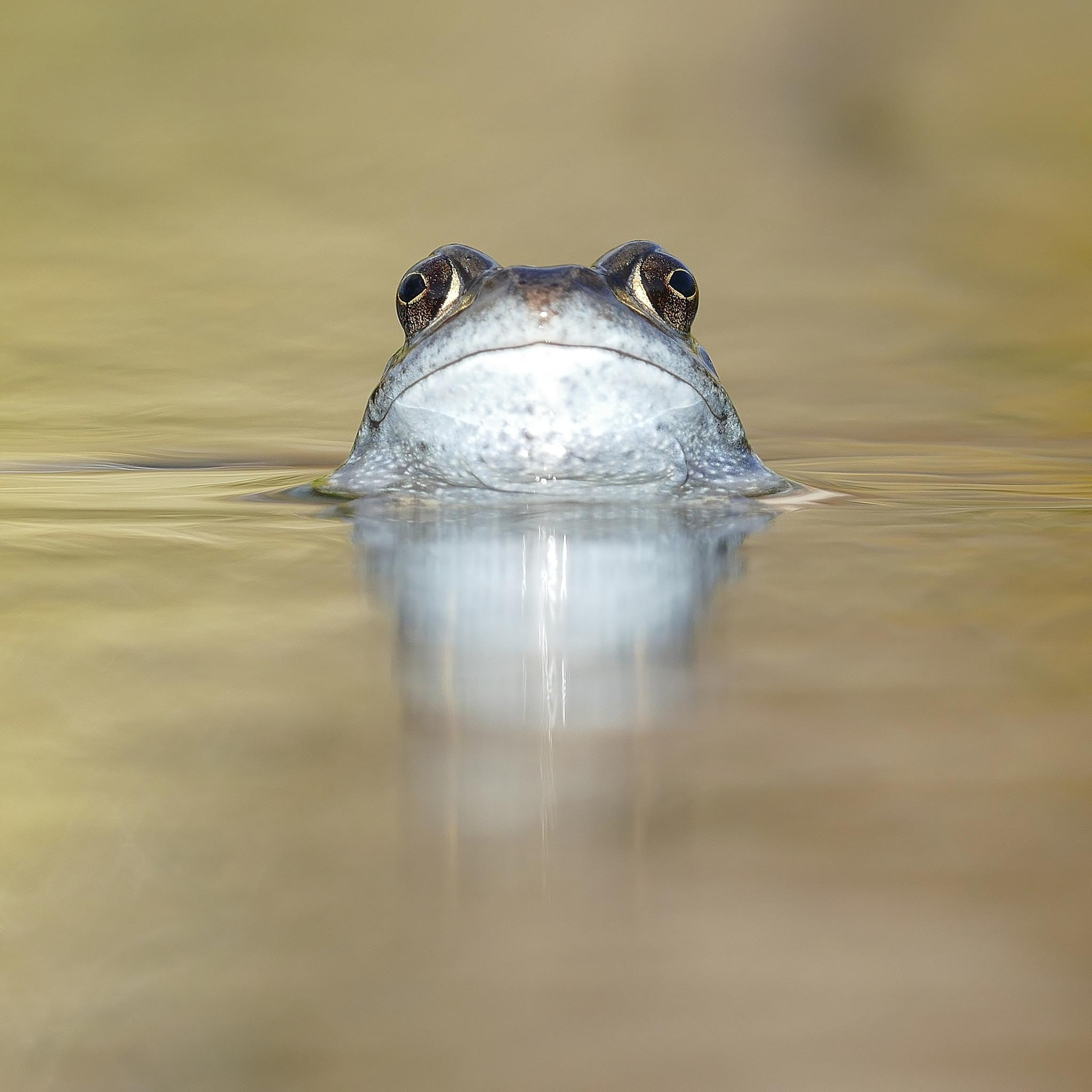 Frog. by JB62