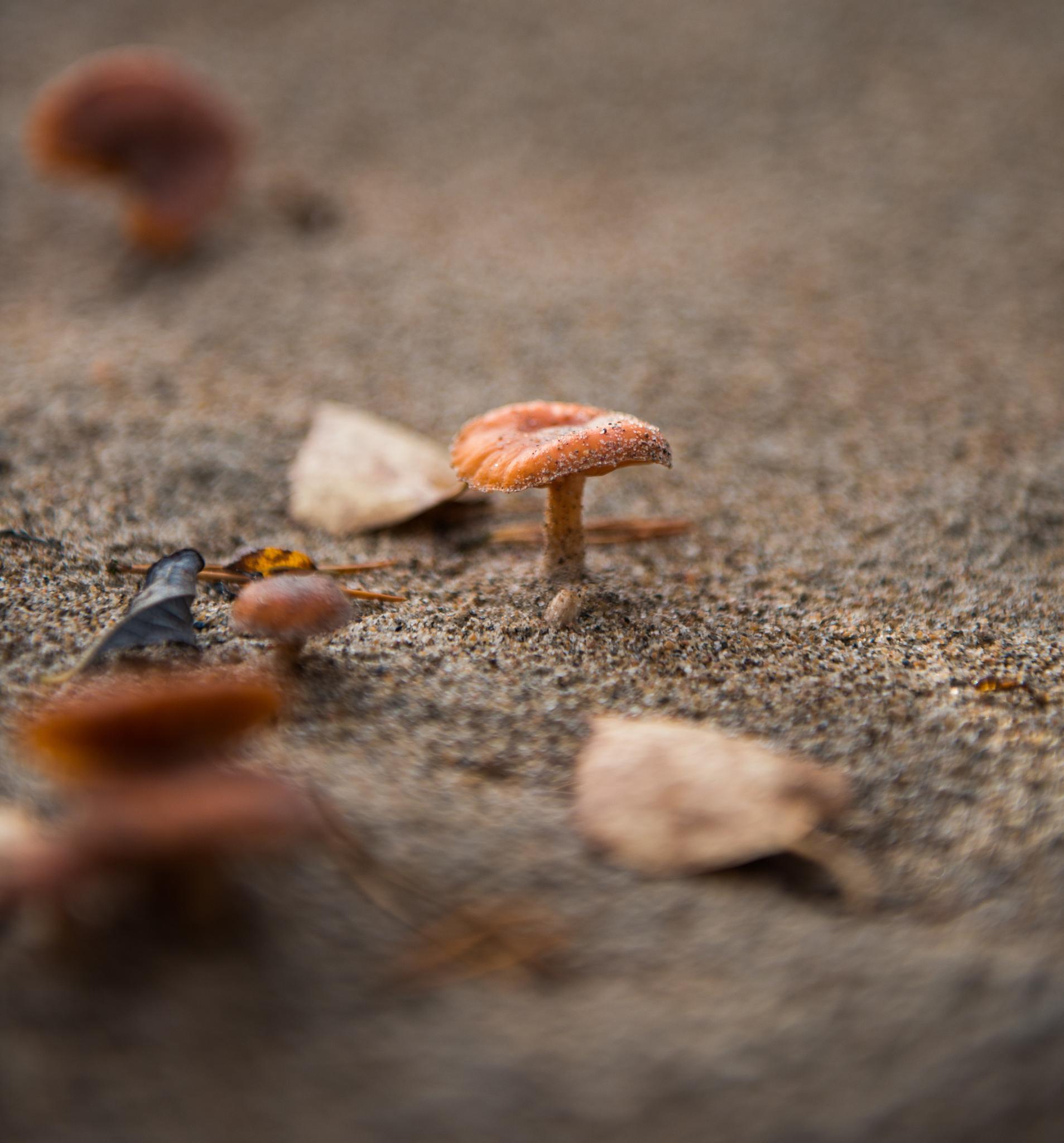 Sandy Mushroom by jokumzie