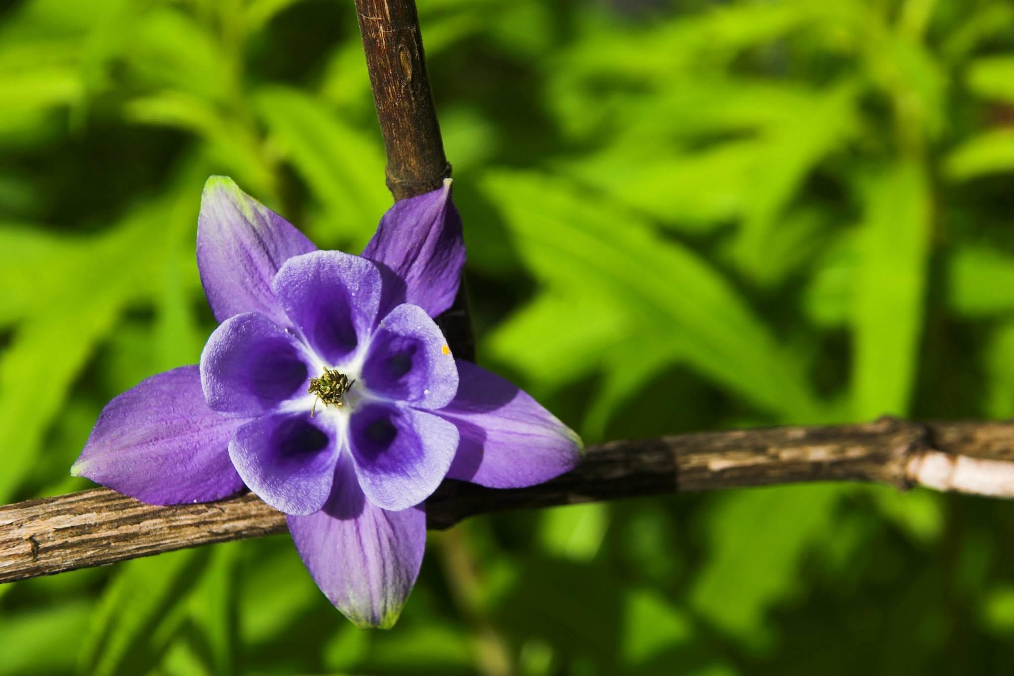 Flower by jokumzie