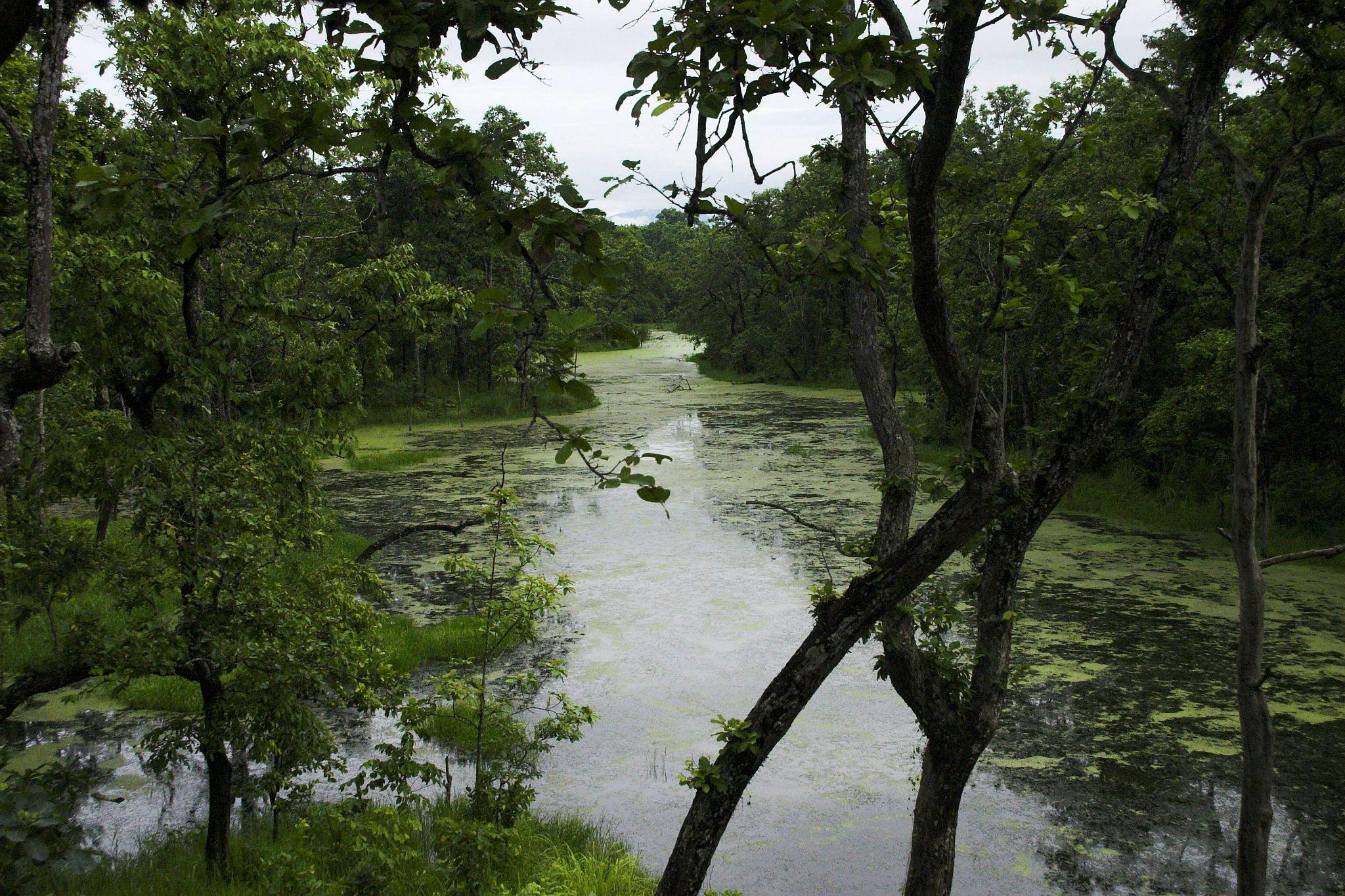Jungle view by jokumzie