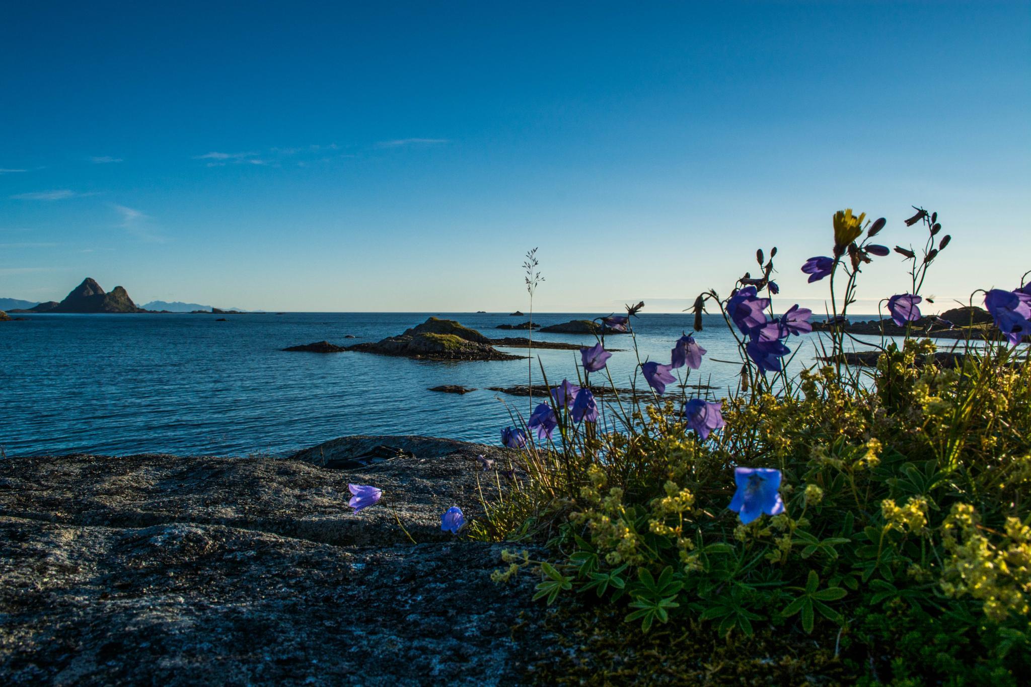 Flower power  by line.kristiansen3