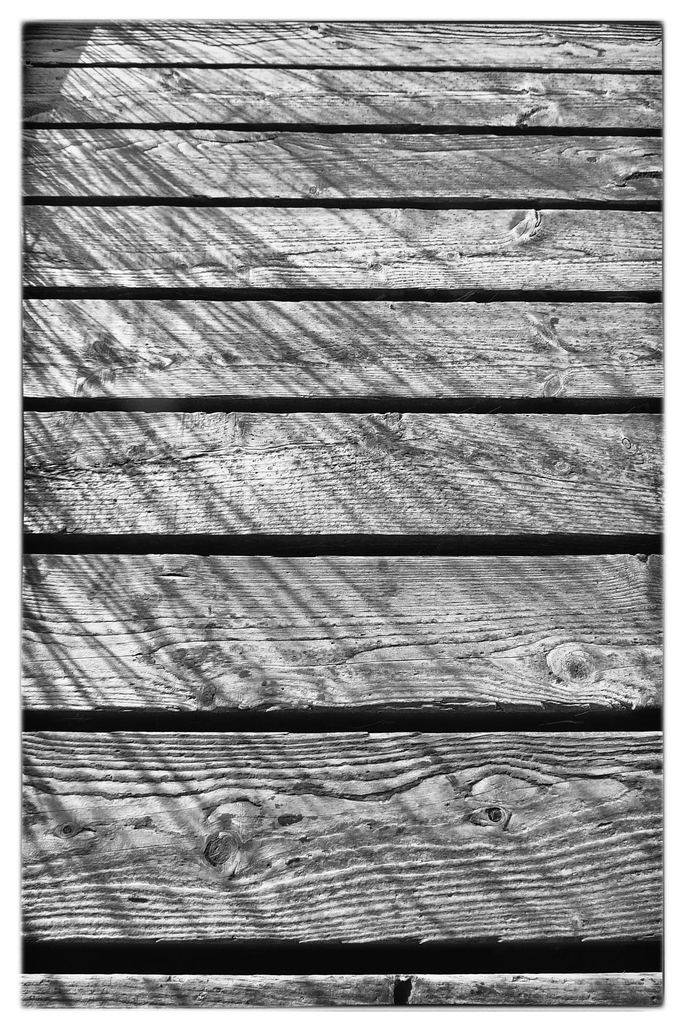 Sedge Shadows by isegarth