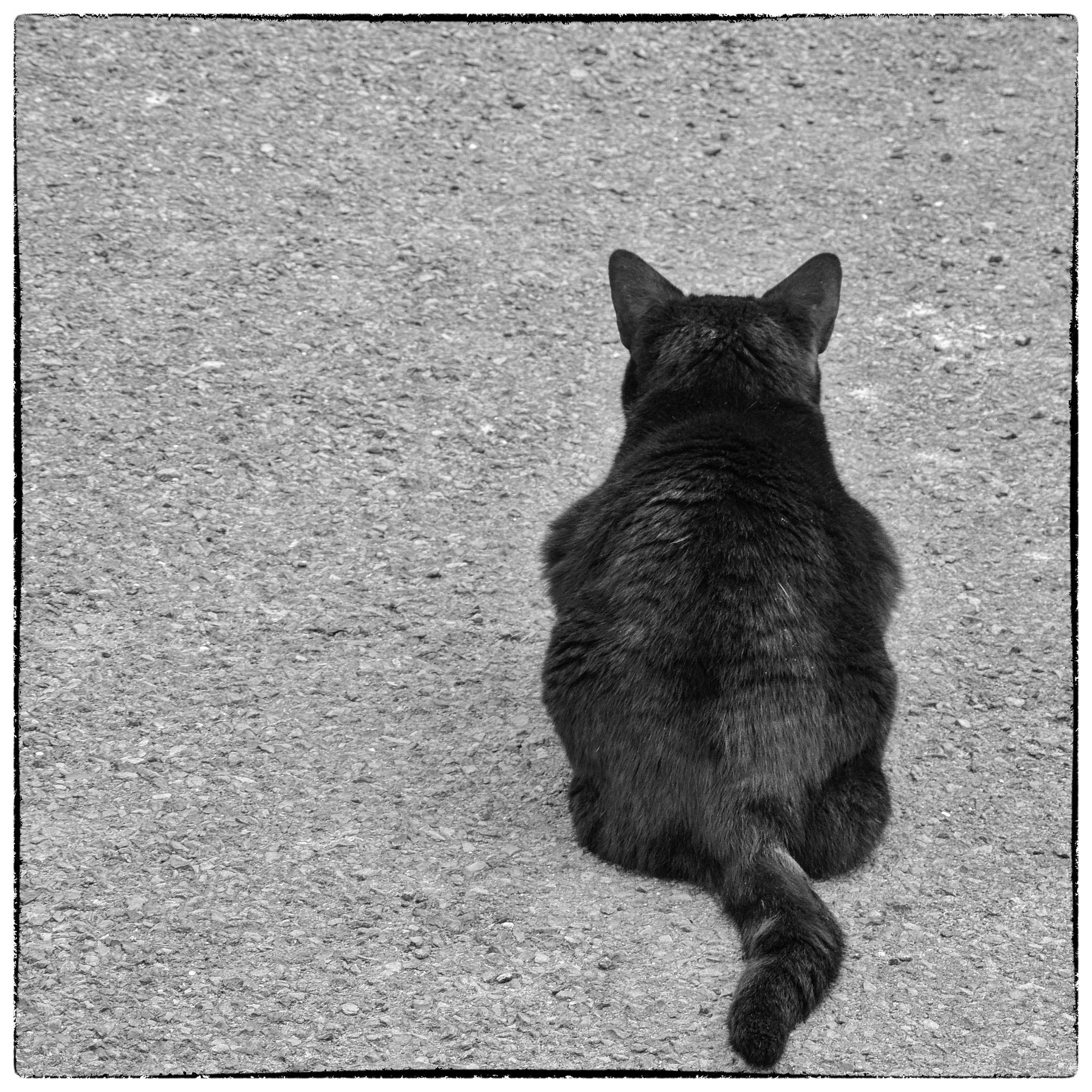 Black Cat by isegarth