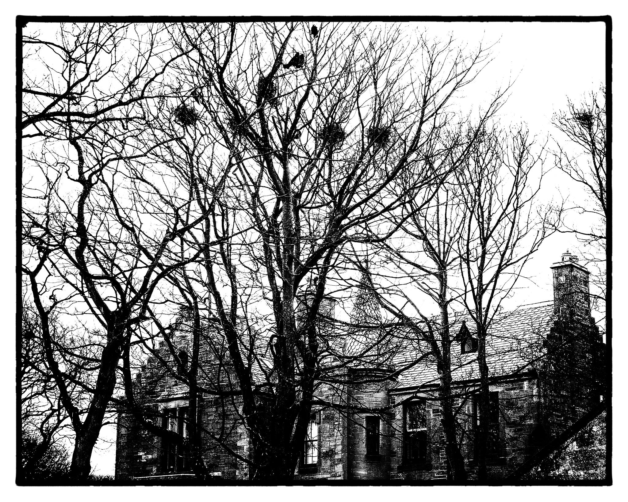 Rookery by isegarth