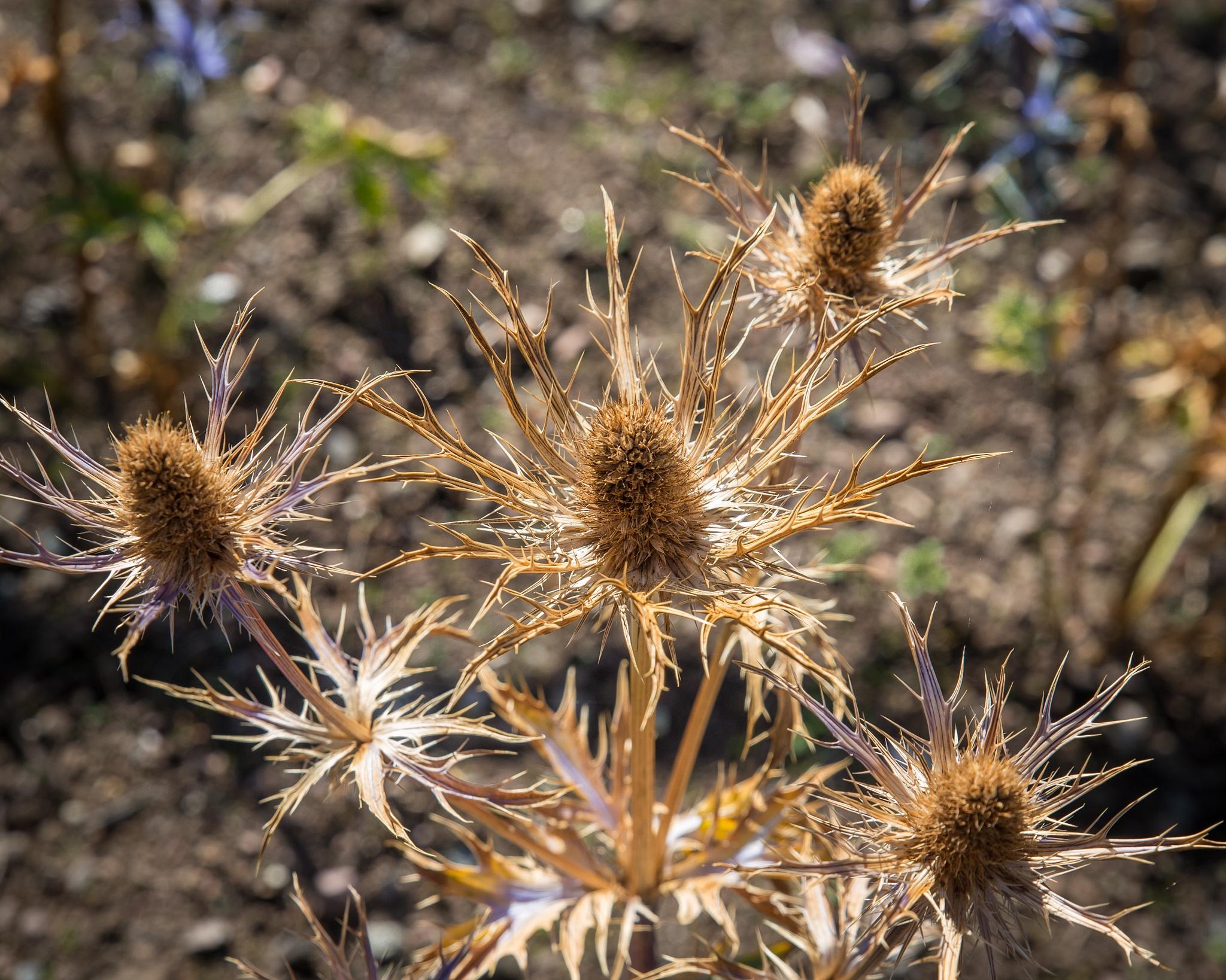 Spiky by isegarth