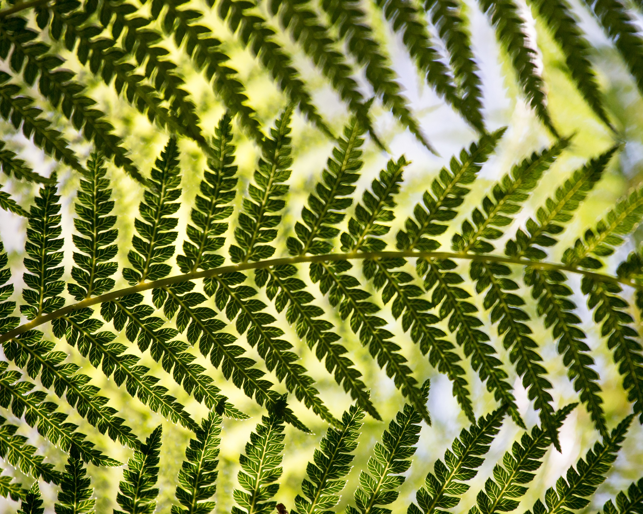 Frond by isegarth