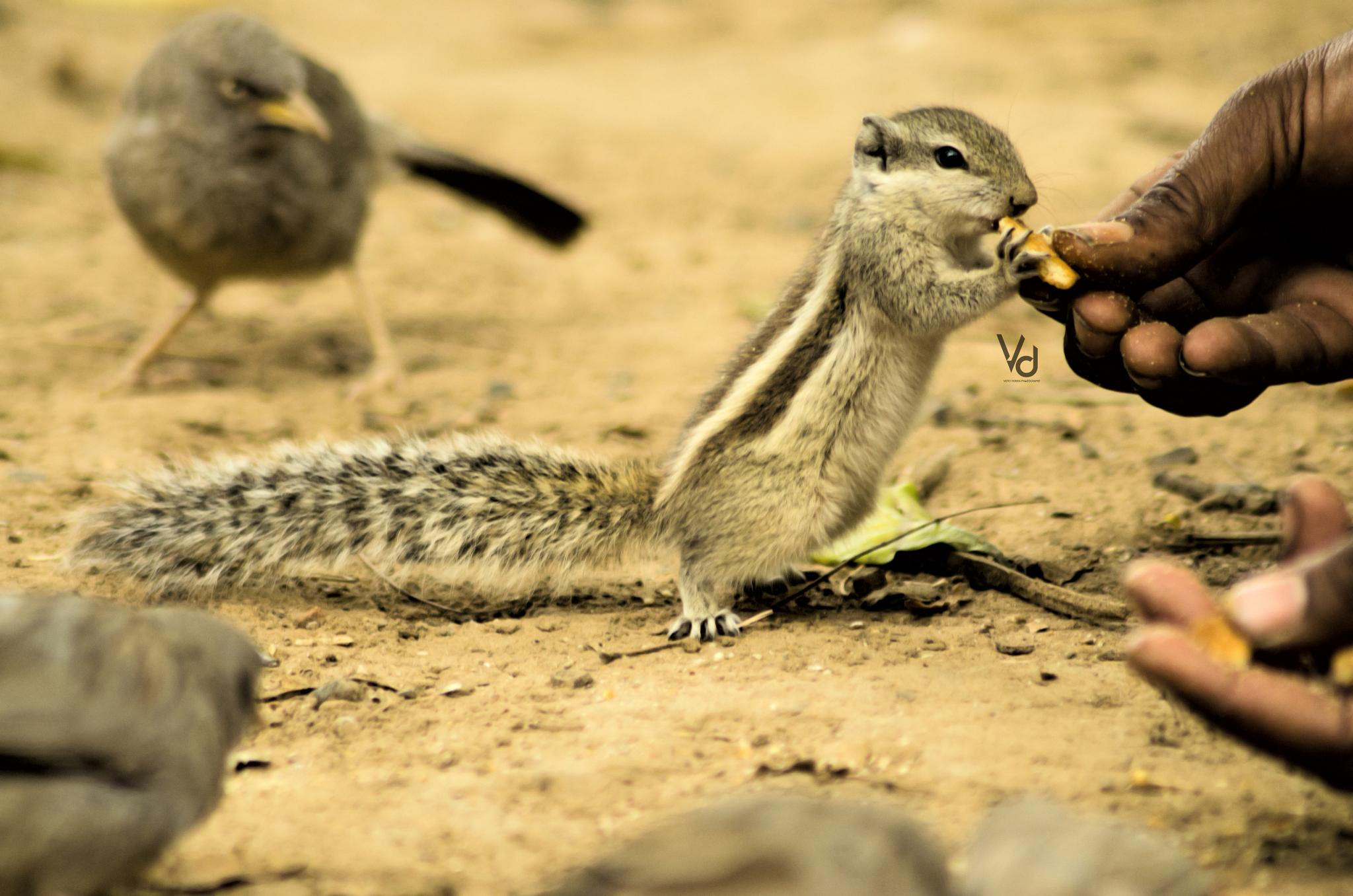 Hungry Squirrel! by Vicky Dodiya
