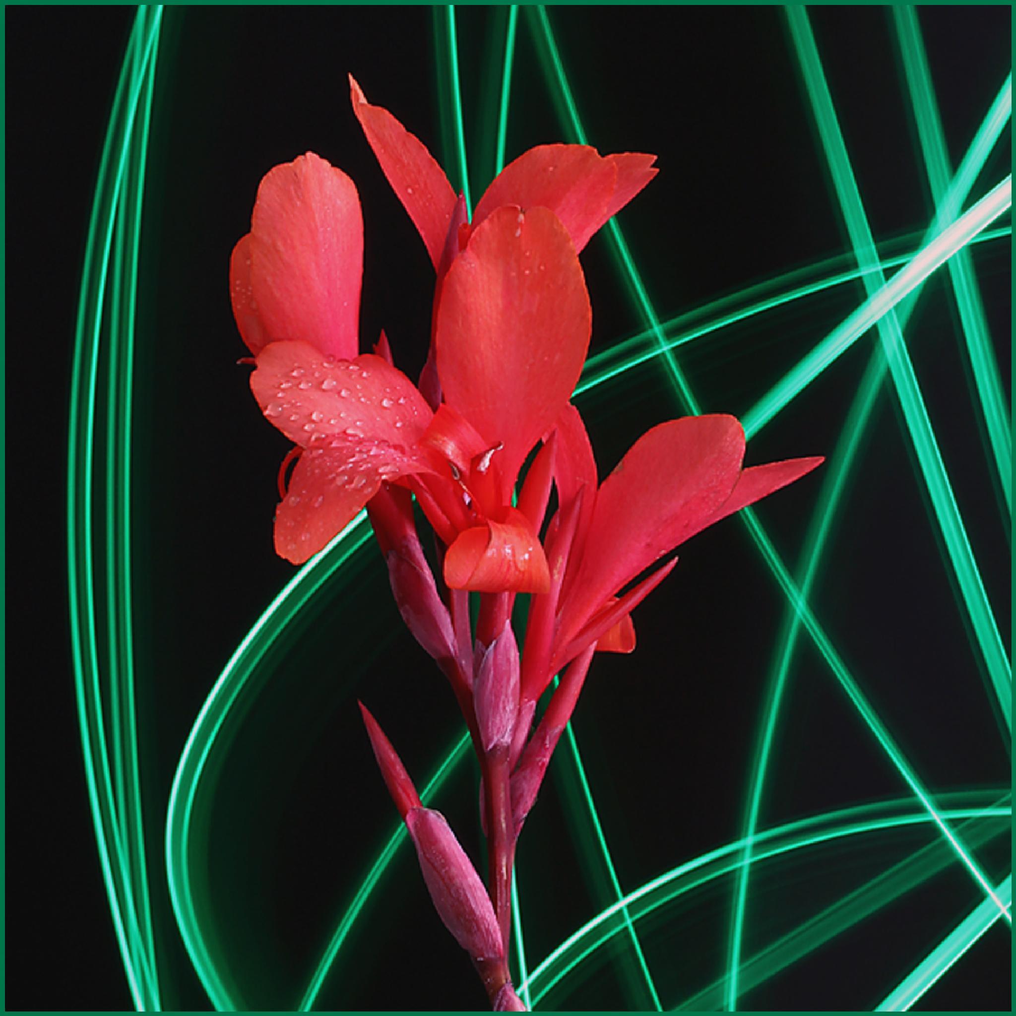 Flower - abstract by Vladimír Novák